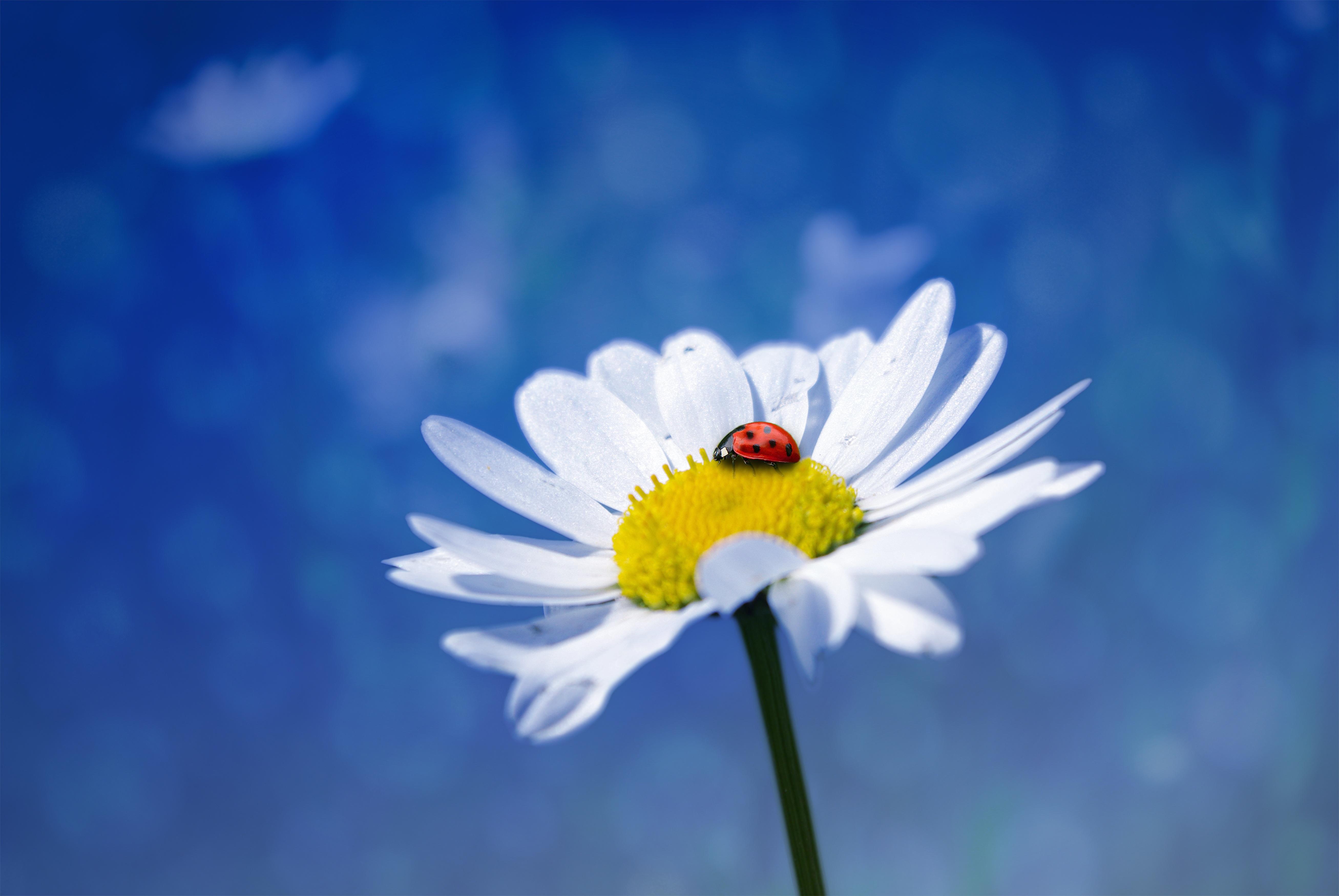 Фото в лепестках цветка для фотомонтажа