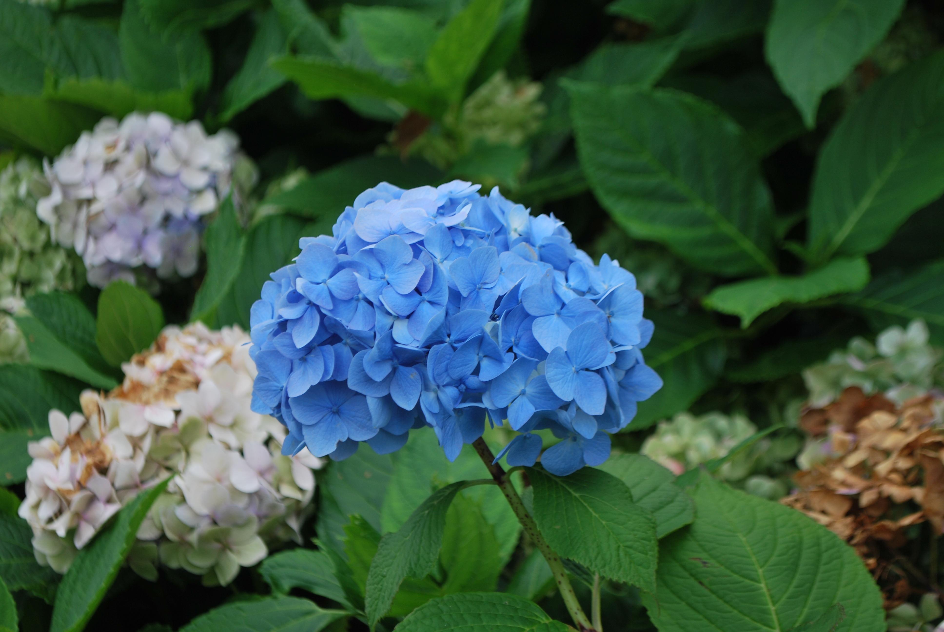 Images gratuites la nature fleur tige p tale for Plante a fleur exterieur