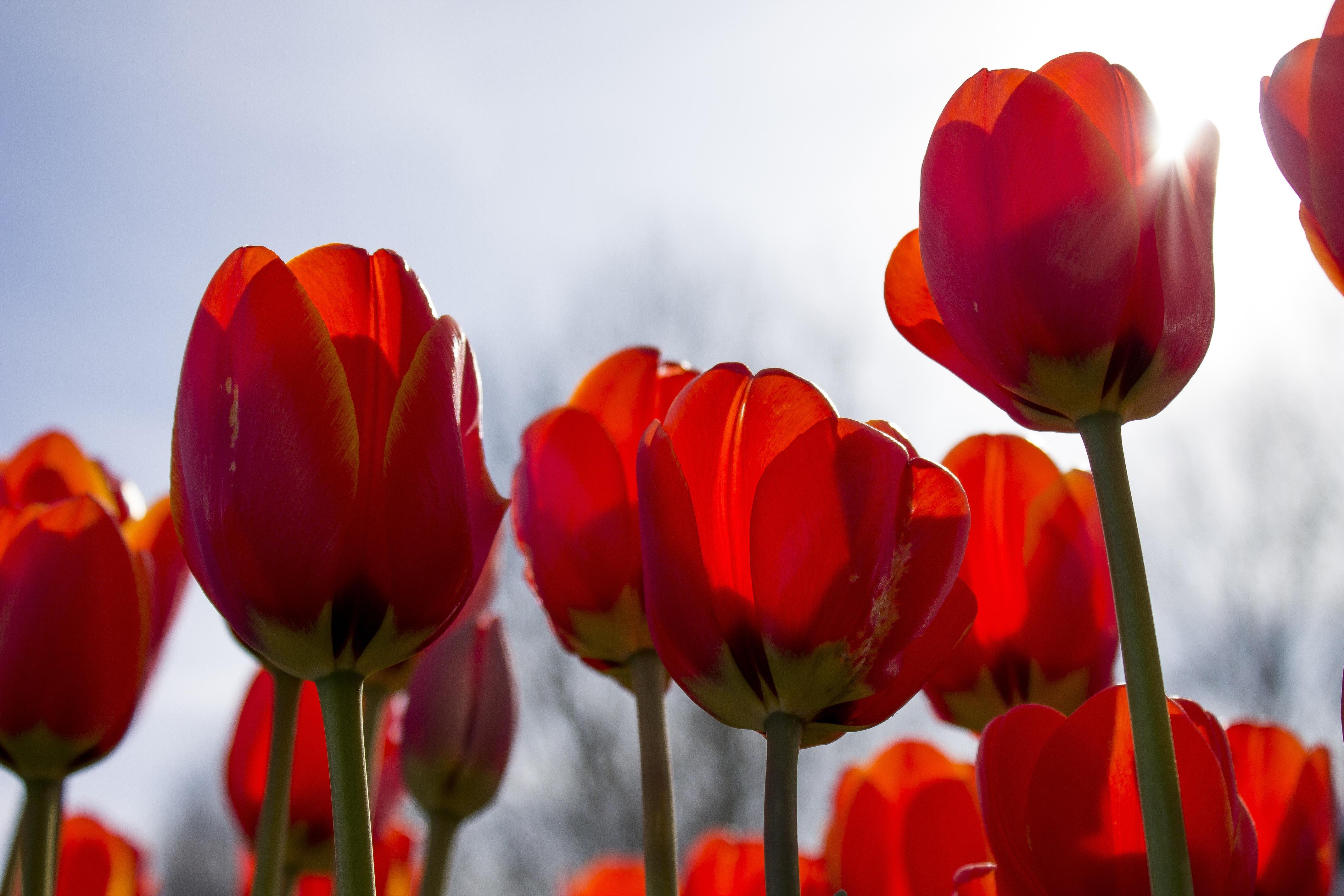 Free Images : nature, blossom, sun, flower, petal, bloom, summer ...