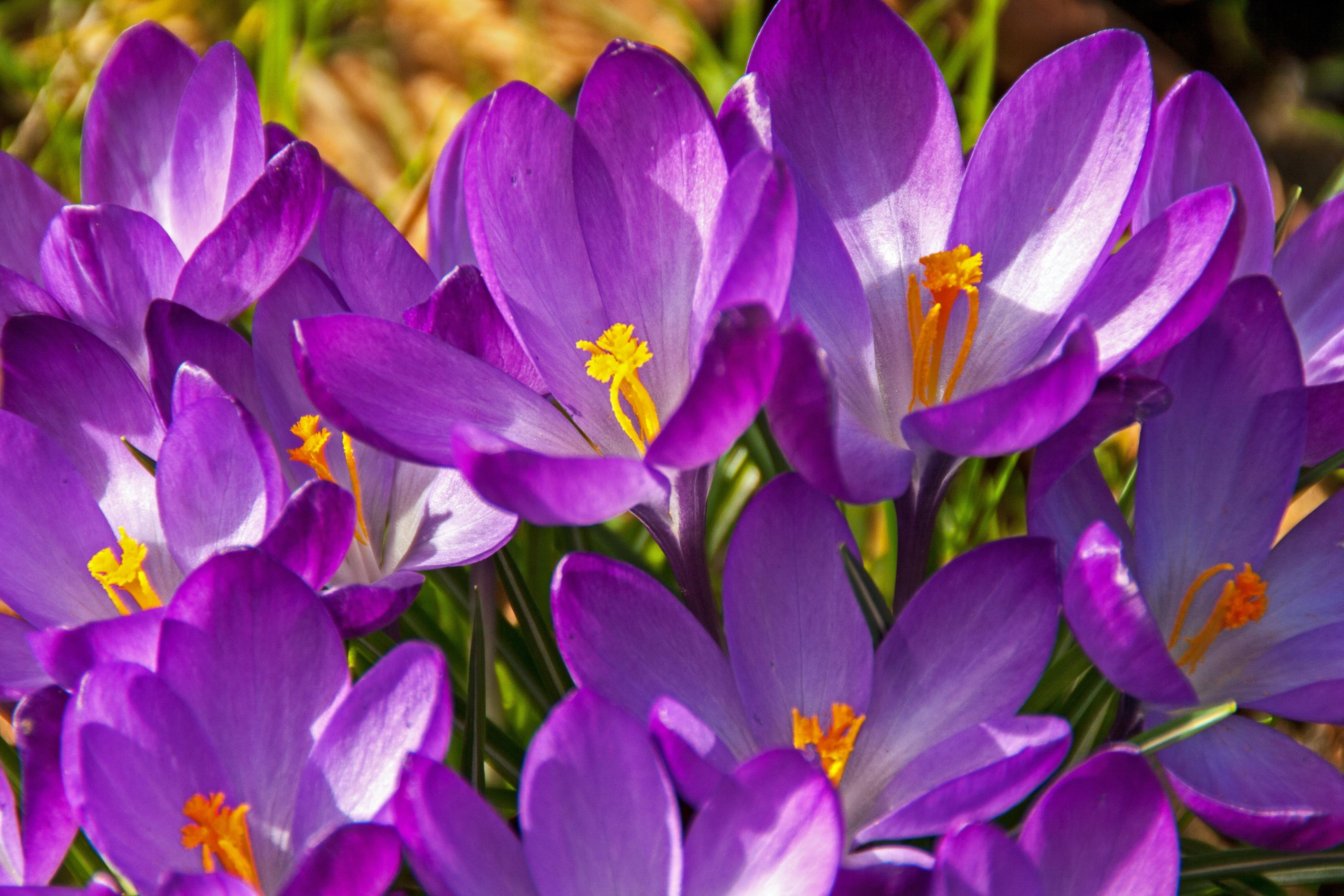 Free Images Nature Blossom Sun Petal Bloom Summer Allergy