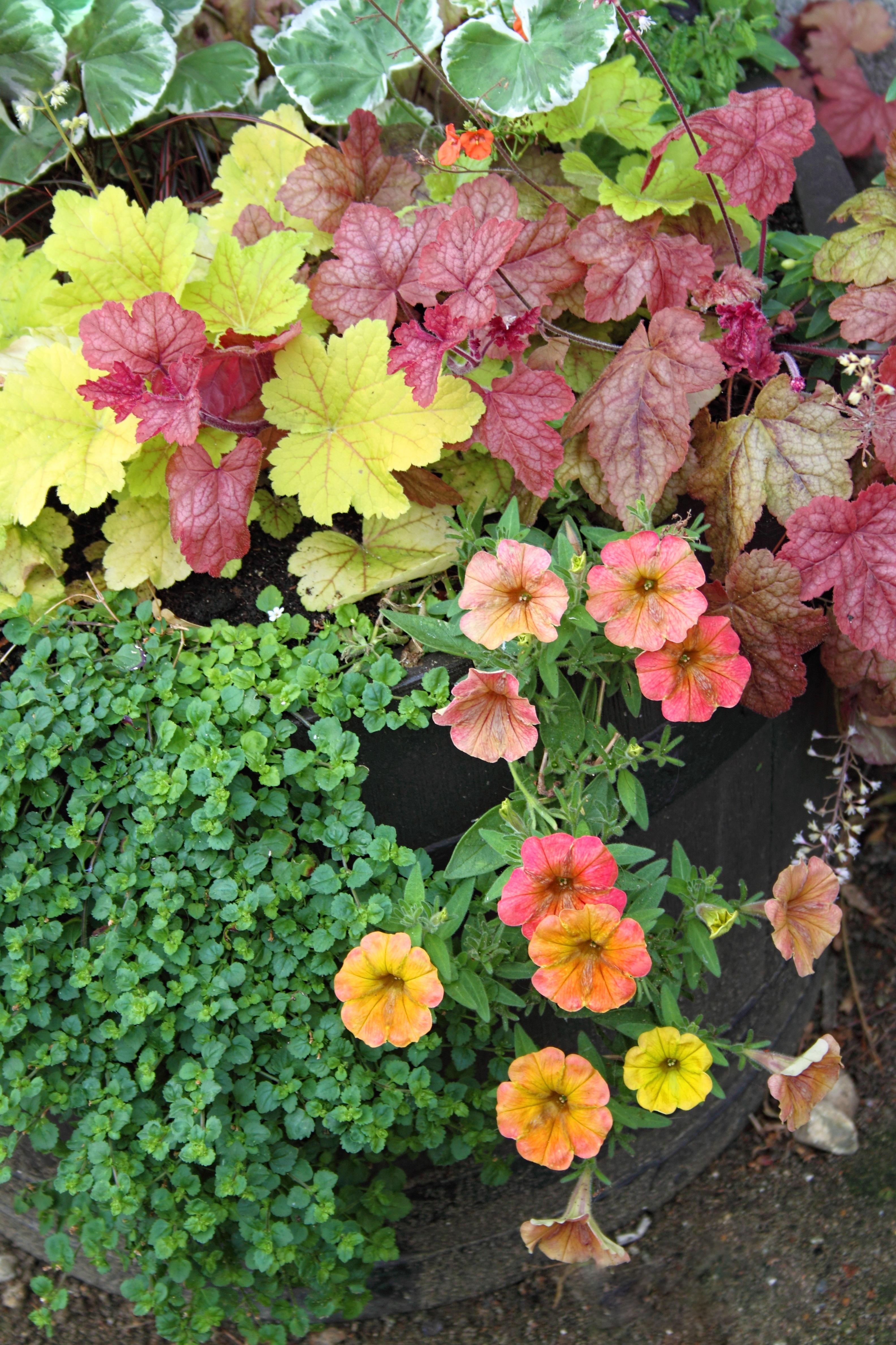 Immagini belle natura fiorire sole foglia fiore - Fiori di giardino ...