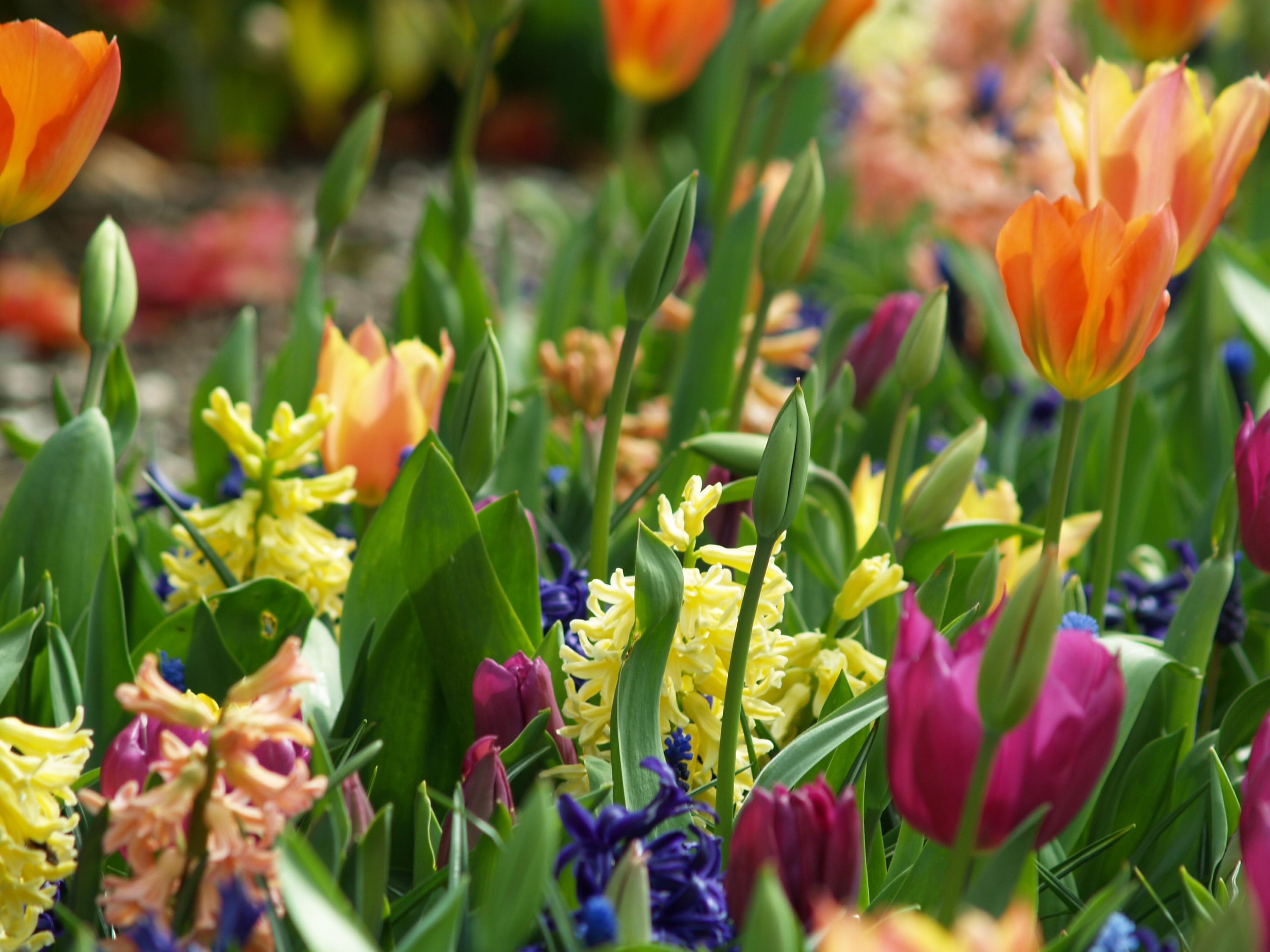 Красивое фото с весенними цветами