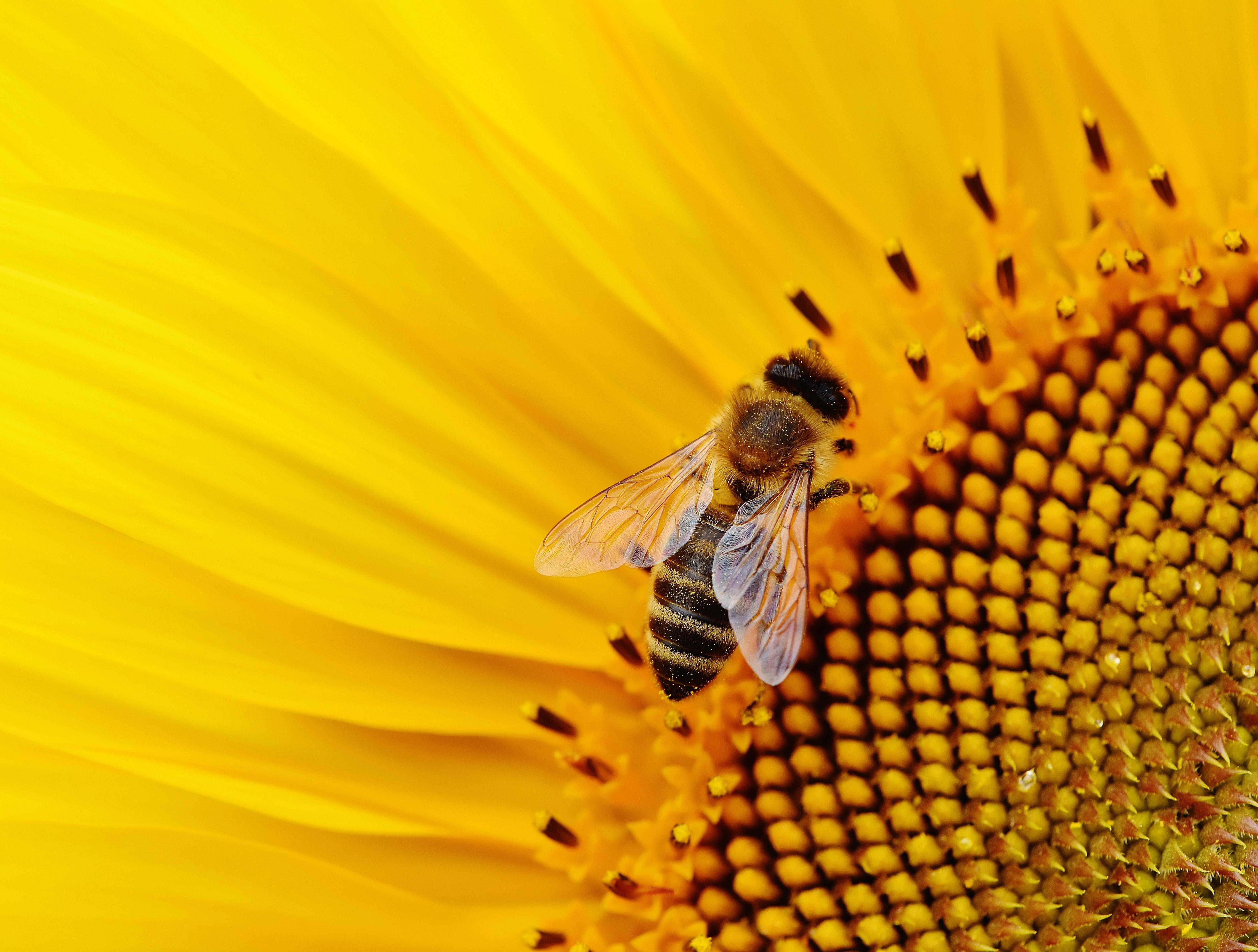 free images nature blossom petal bloom summer pollen pollination yellow garden flora. Black Bedroom Furniture Sets. Home Design Ideas