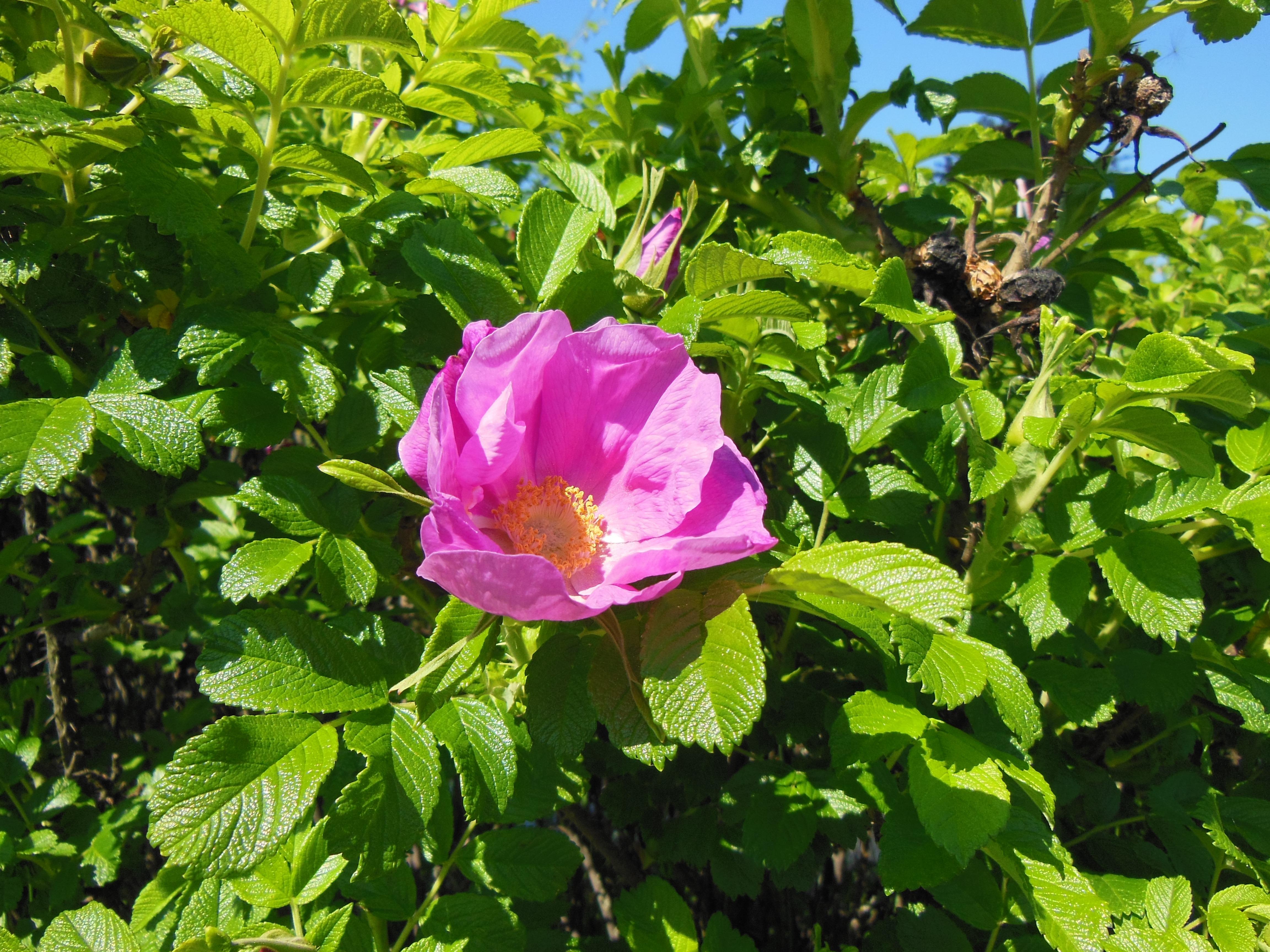 Free Images Nature Blossom Sunshine Green Botany Garden