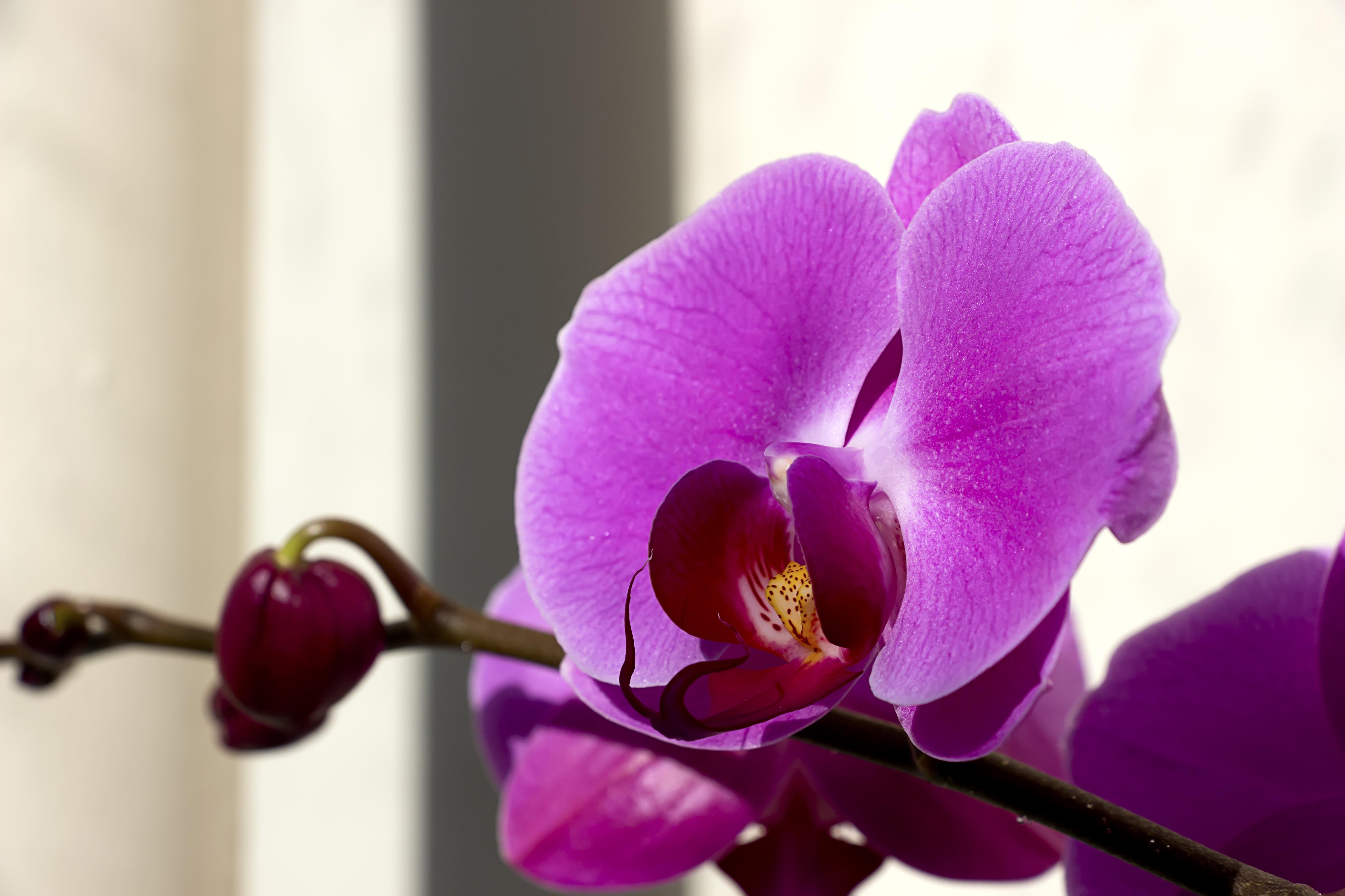 Free Images Nature Blossom Sunshine Morning Flower Purple