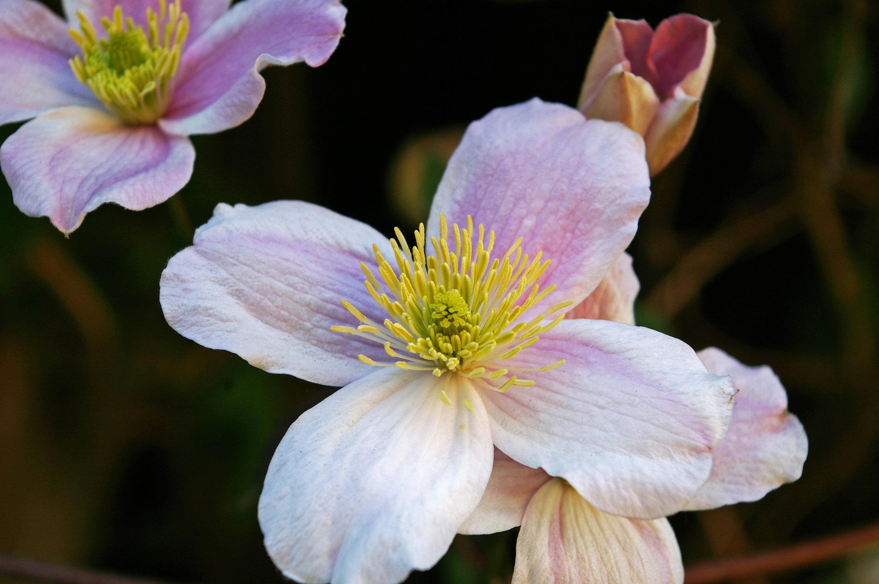 Free Images Nature Blossom Sweet Flower Petal Bloom Botany