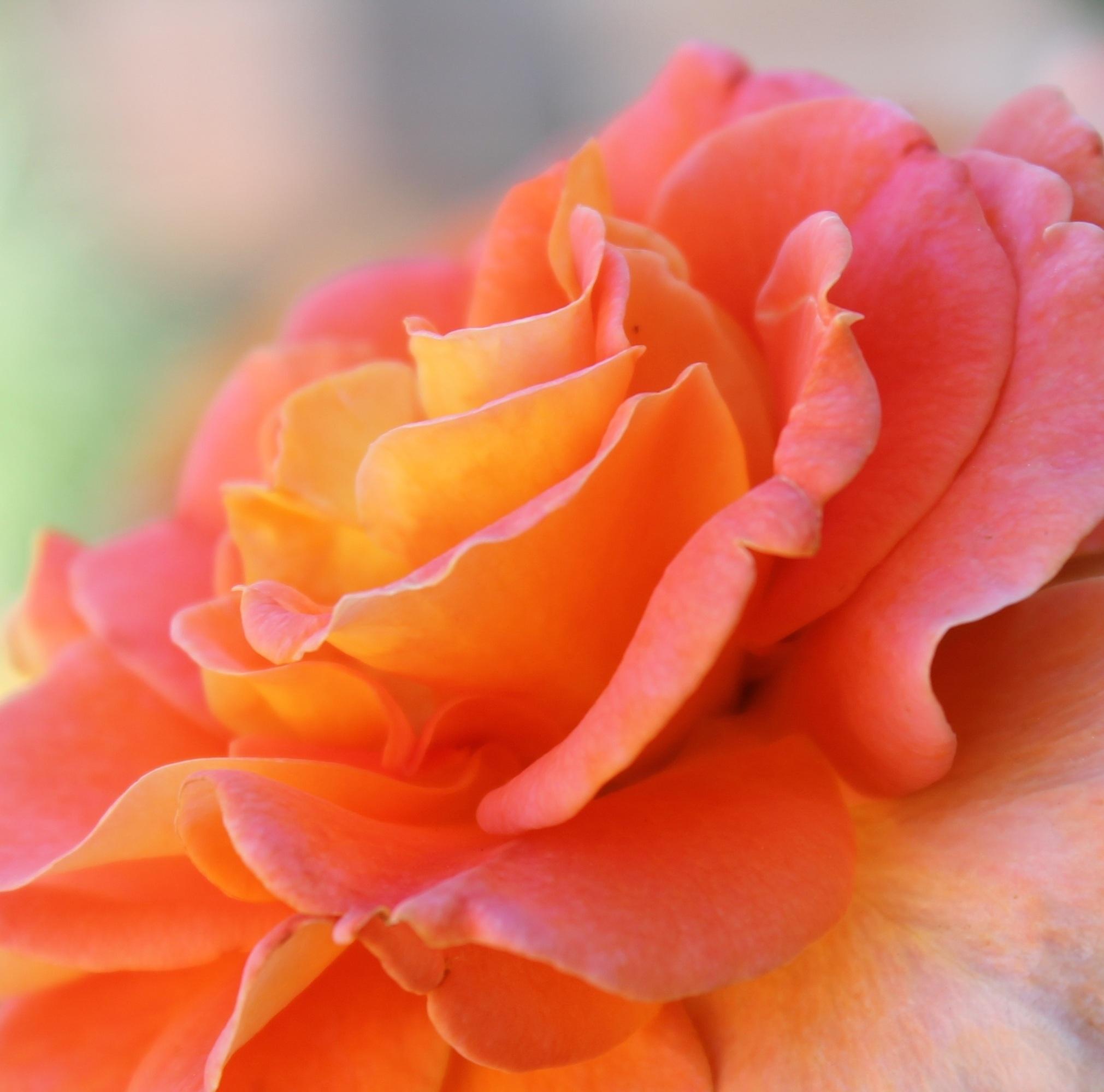 Смотреть картинки персикового цвета