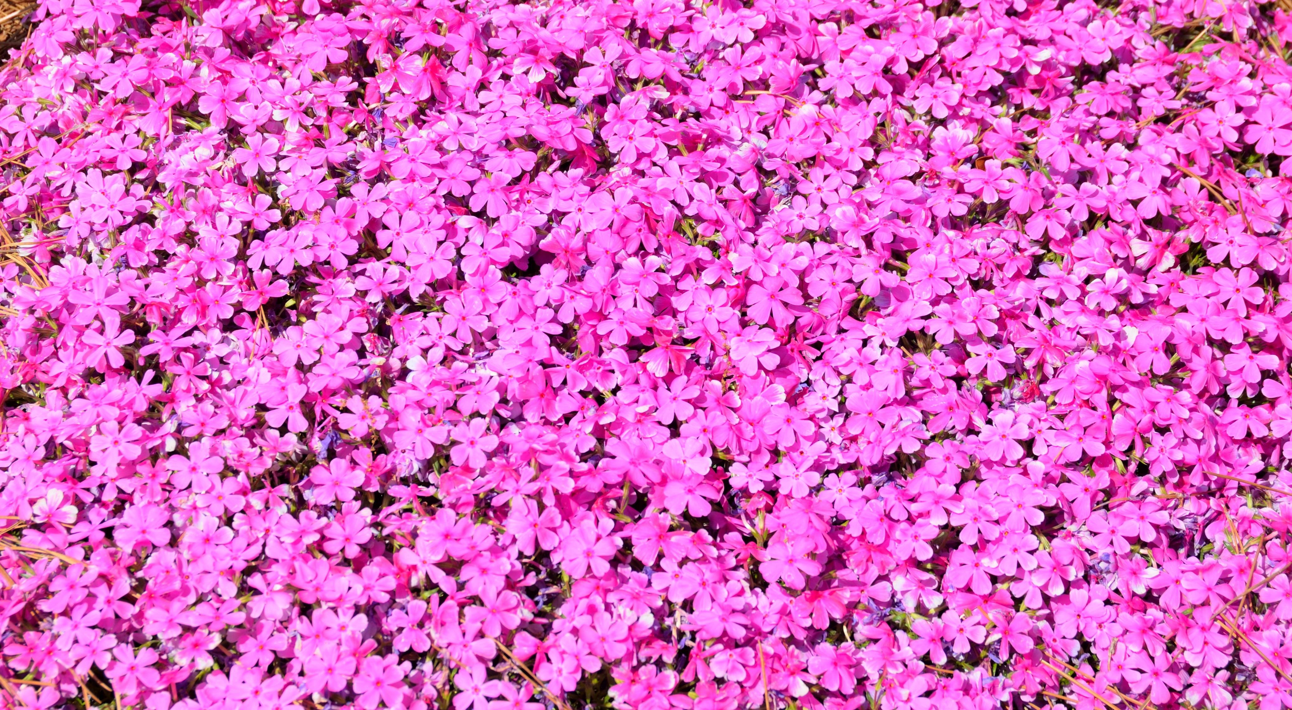 Images Gratuites La Nature Fleur Texture P 233 Tale