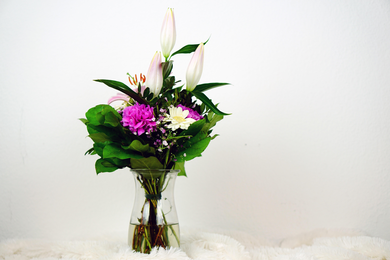 fotos gratis naturaleza flor blanco florecer celebracion amor regalo decoracin verde vistoso rosado flora da de la boda flores art