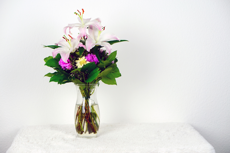 fotos gratis naturaleza flor blanco florecer celebracion amor regalo florero decoracin verde vistoso rosado flora da de la boda flores