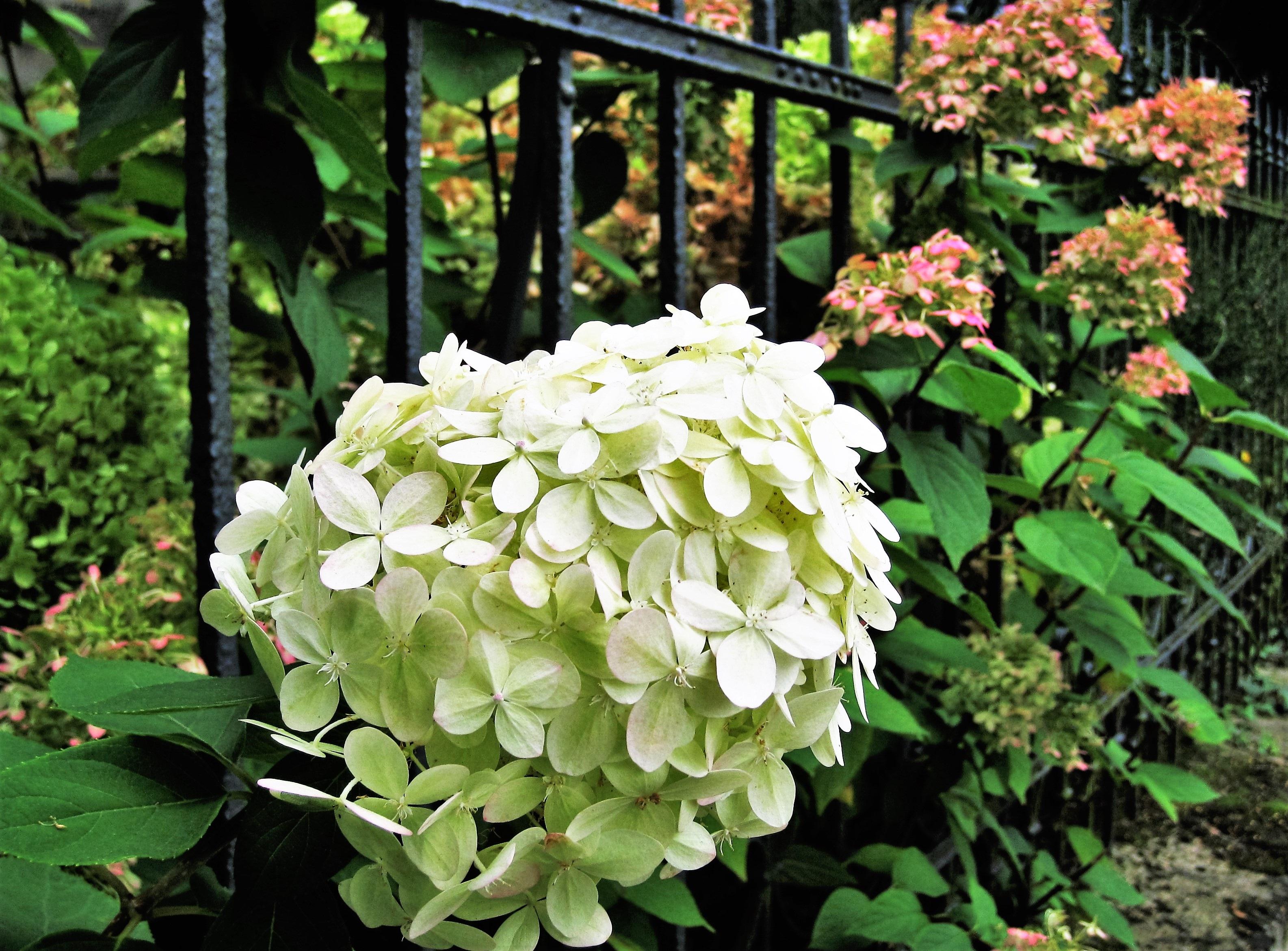 Free Images Nature Blossom White Bloom Rustic Bush Botany