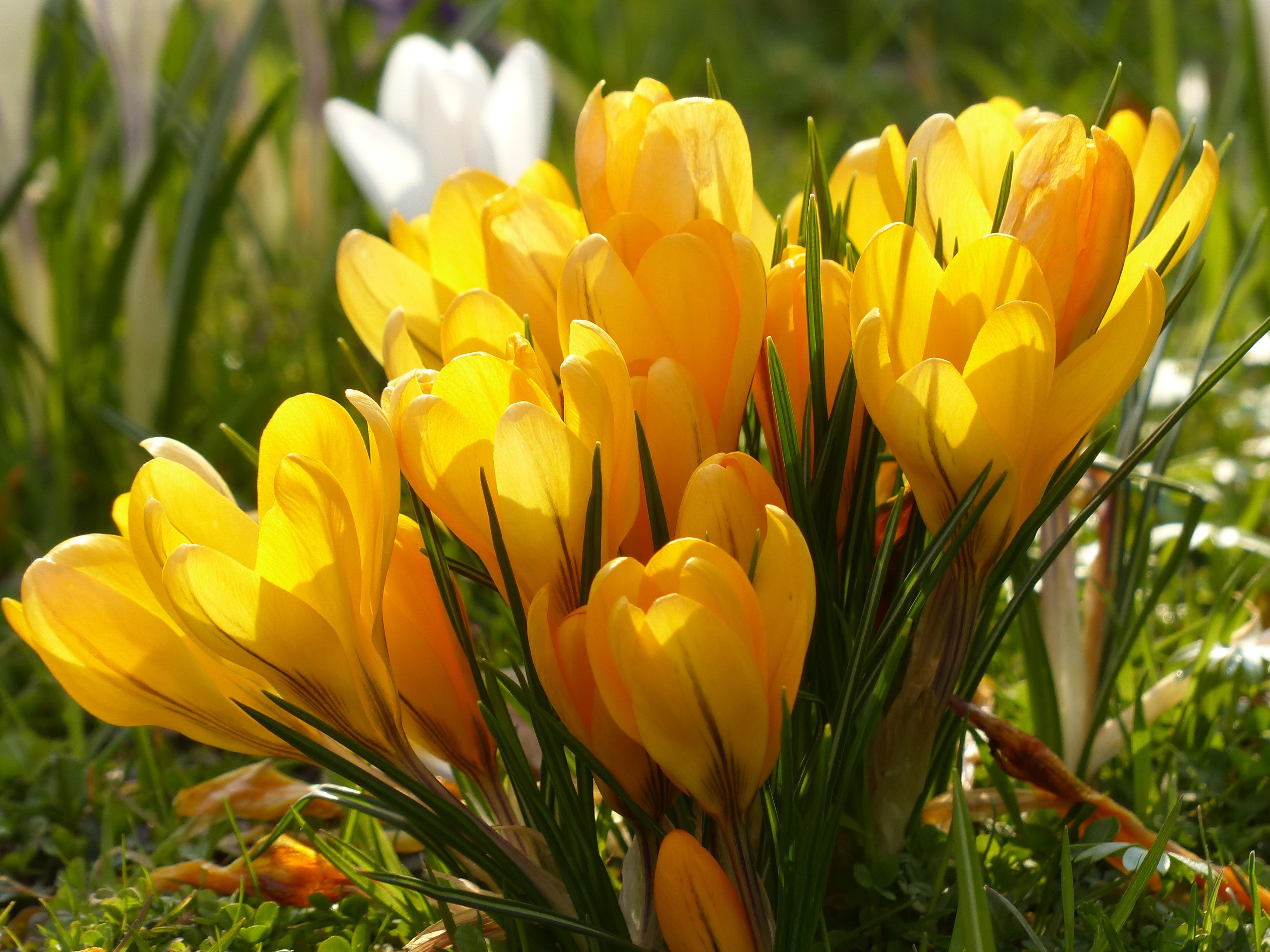 Цветы картинка весенние