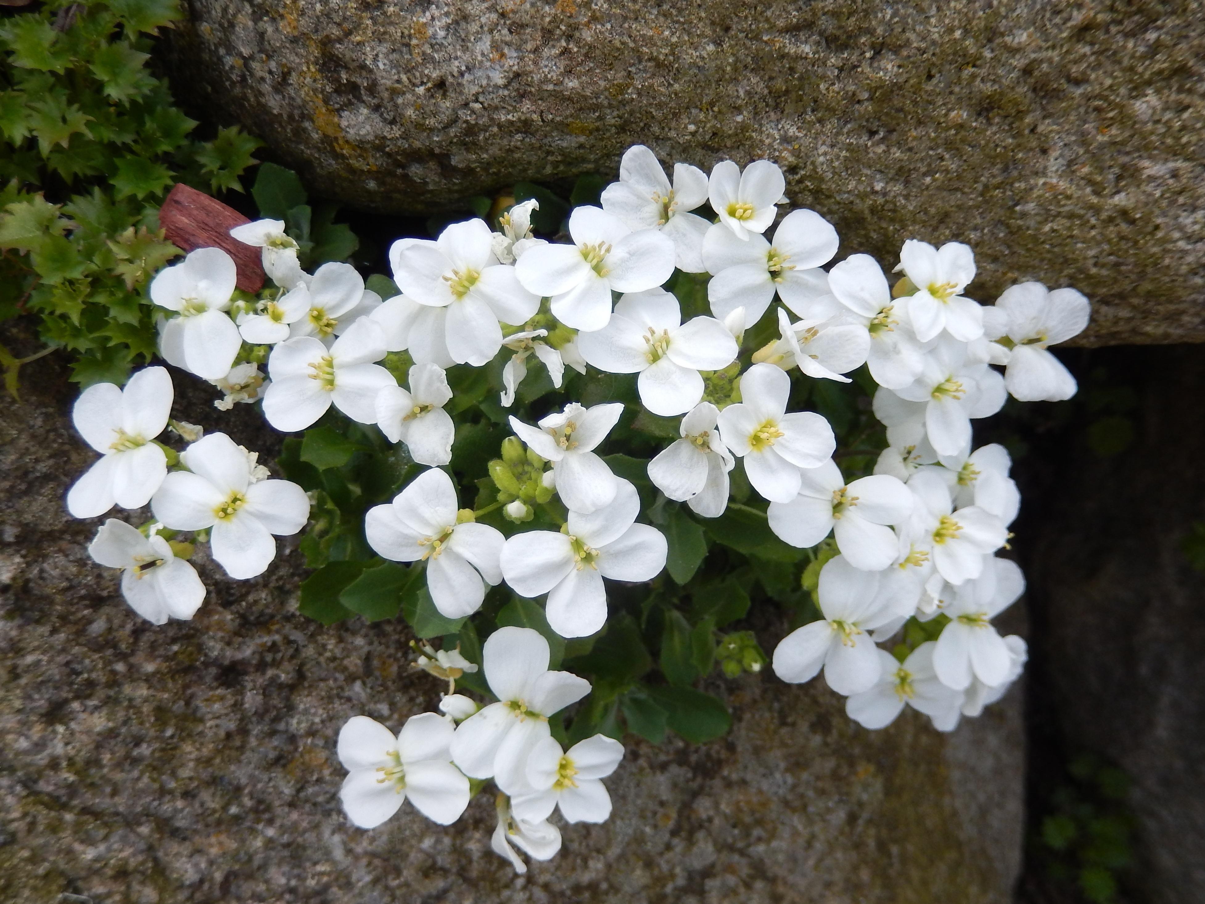 Free Images Nature Blossom White Bloom Botany Flora
