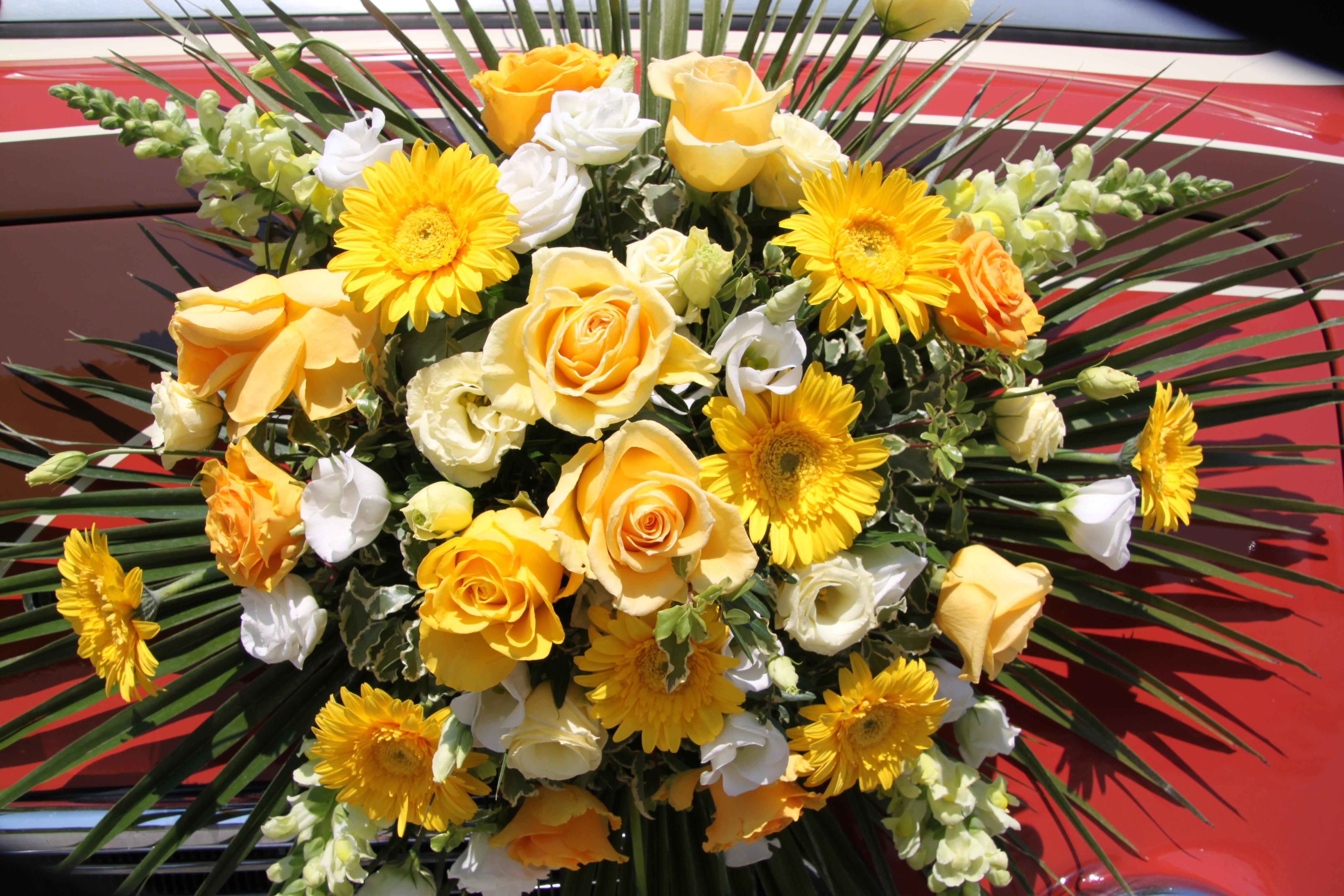 kostenlose foto natur bl hen wei blume sommer liebe farbe bunt gelb flora. Black Bedroom Furniture Sets. Home Design Ideas