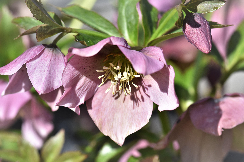 Kostenlose foto : Natur, Weiß, Blume, Blütenblatt, Frühling, Makro ...