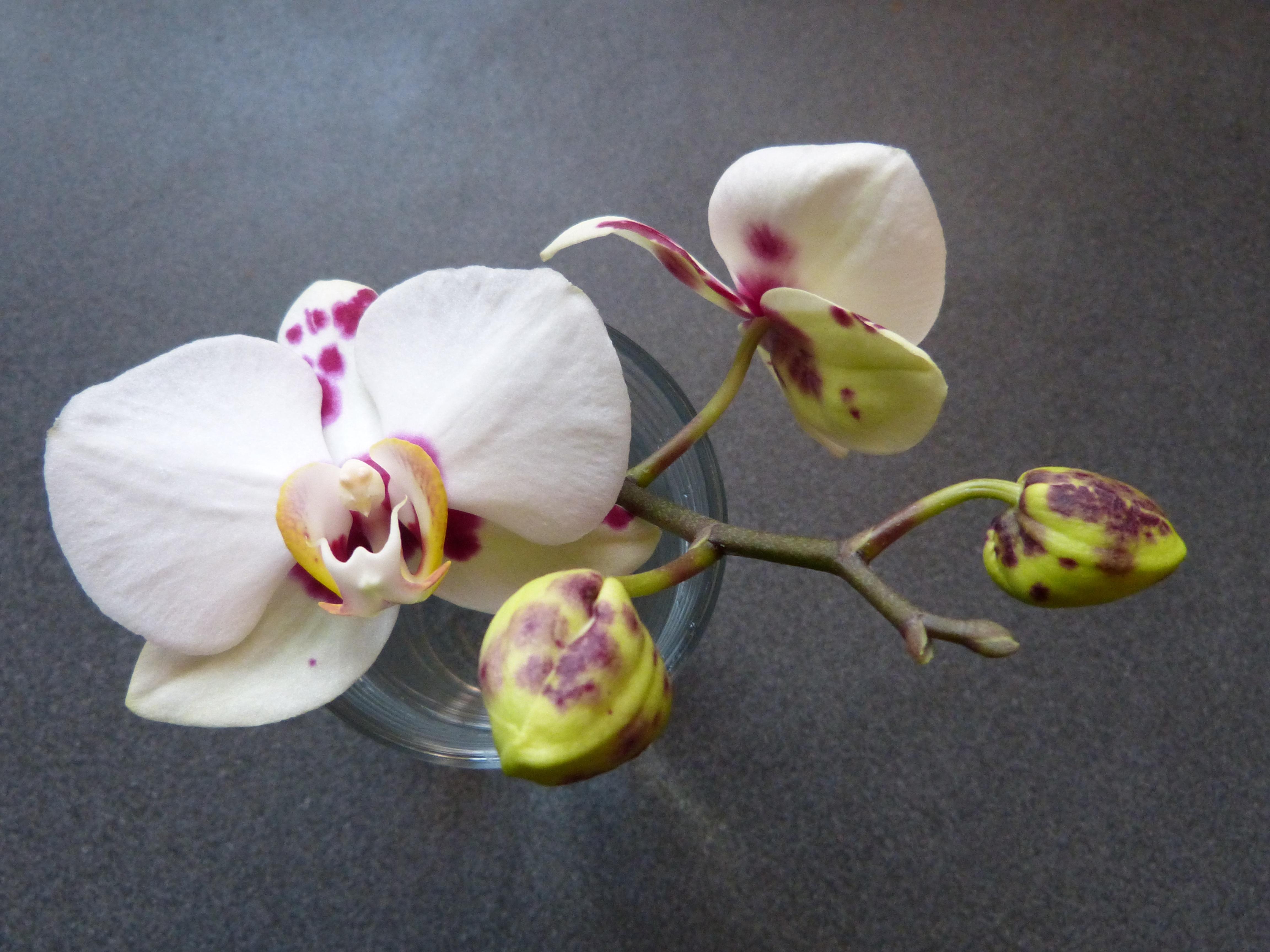 задача это бутоны орхидеи фото признание настоящая награда