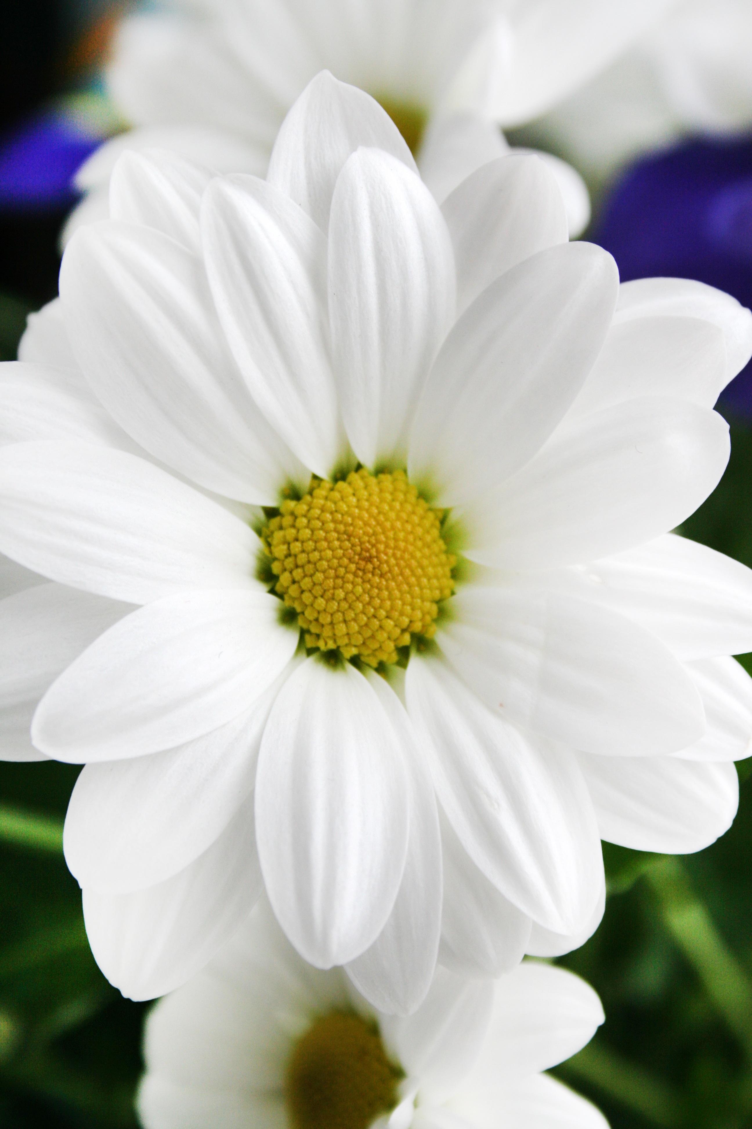 Free Images Nature Blossom White Petal Flora Close Up Cut