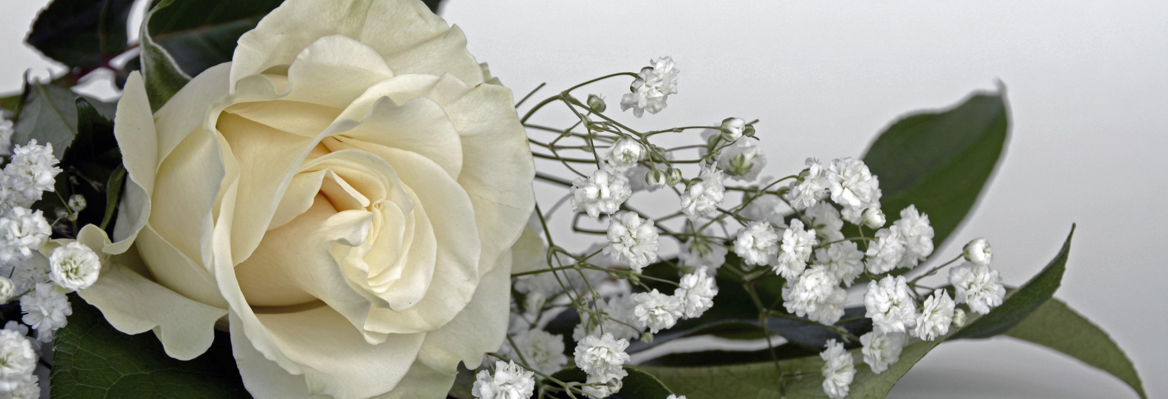 Free Images Nature Blossom White Petal Love Banner Romance