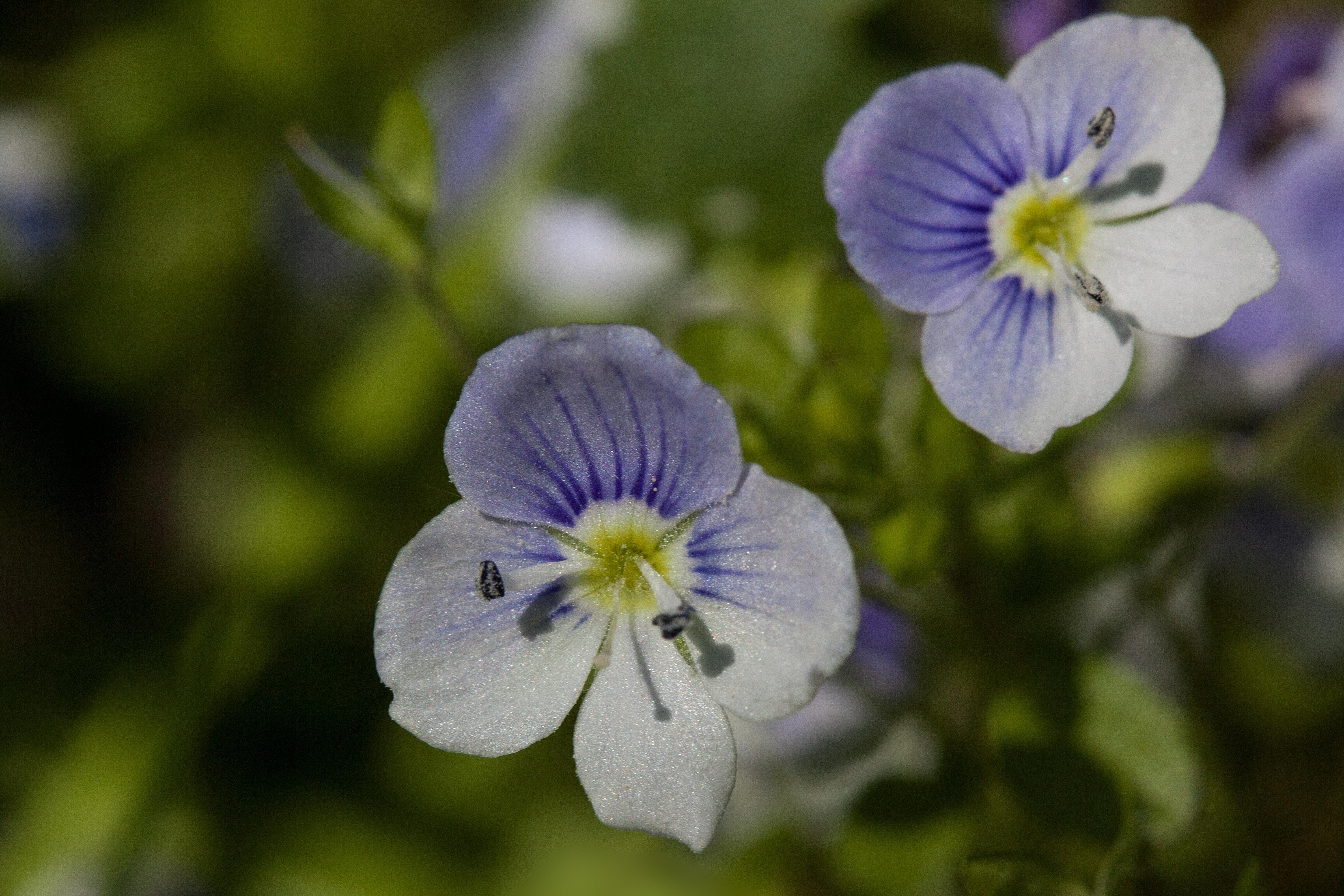 Free Images Nature Blossom White Flower Petal Pollen Spring