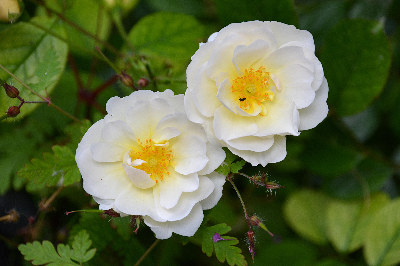Free Images Nature Blossom Flower Petal Botany Flora