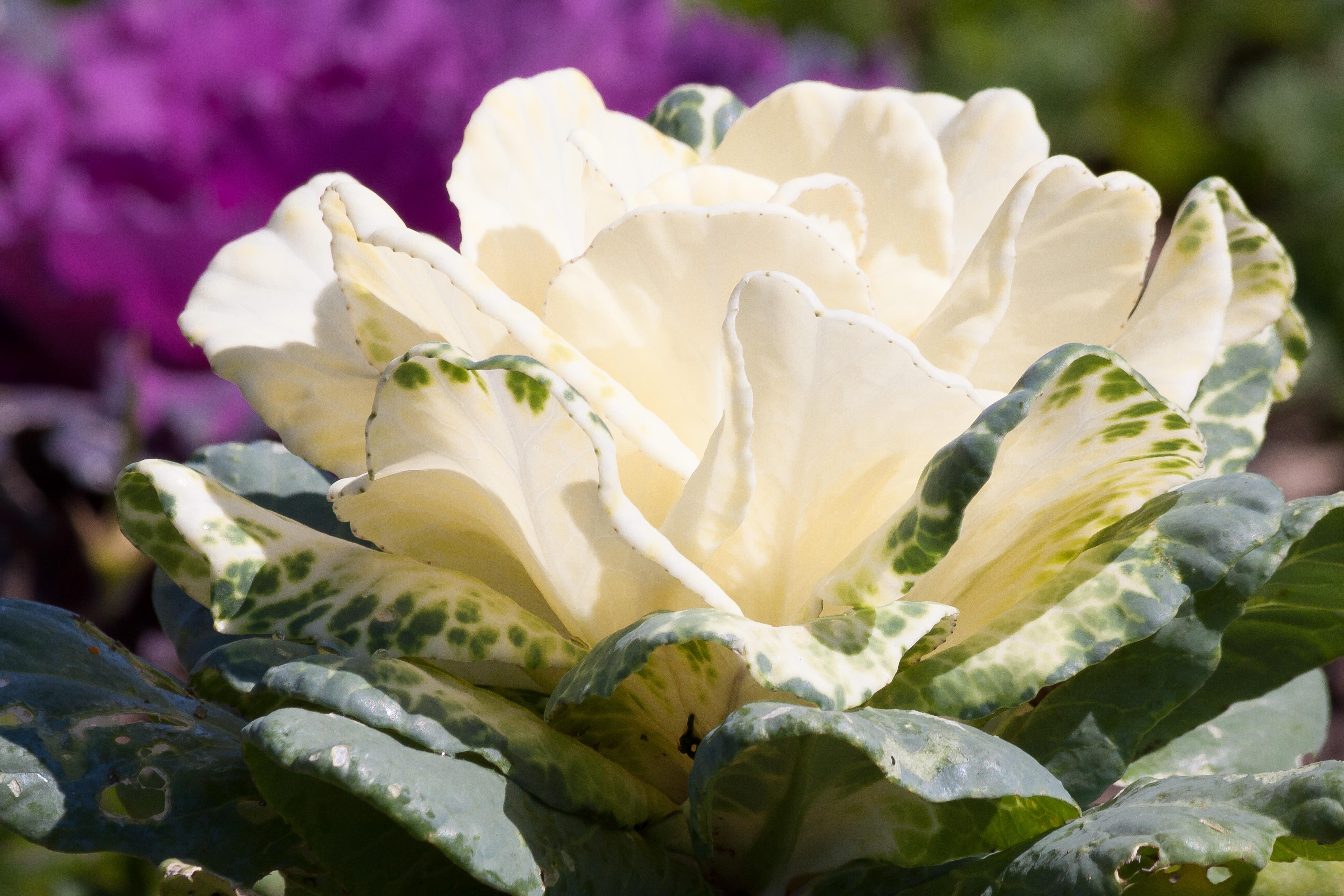 Free Images Nature Blossom White Flower Petal Food Botany