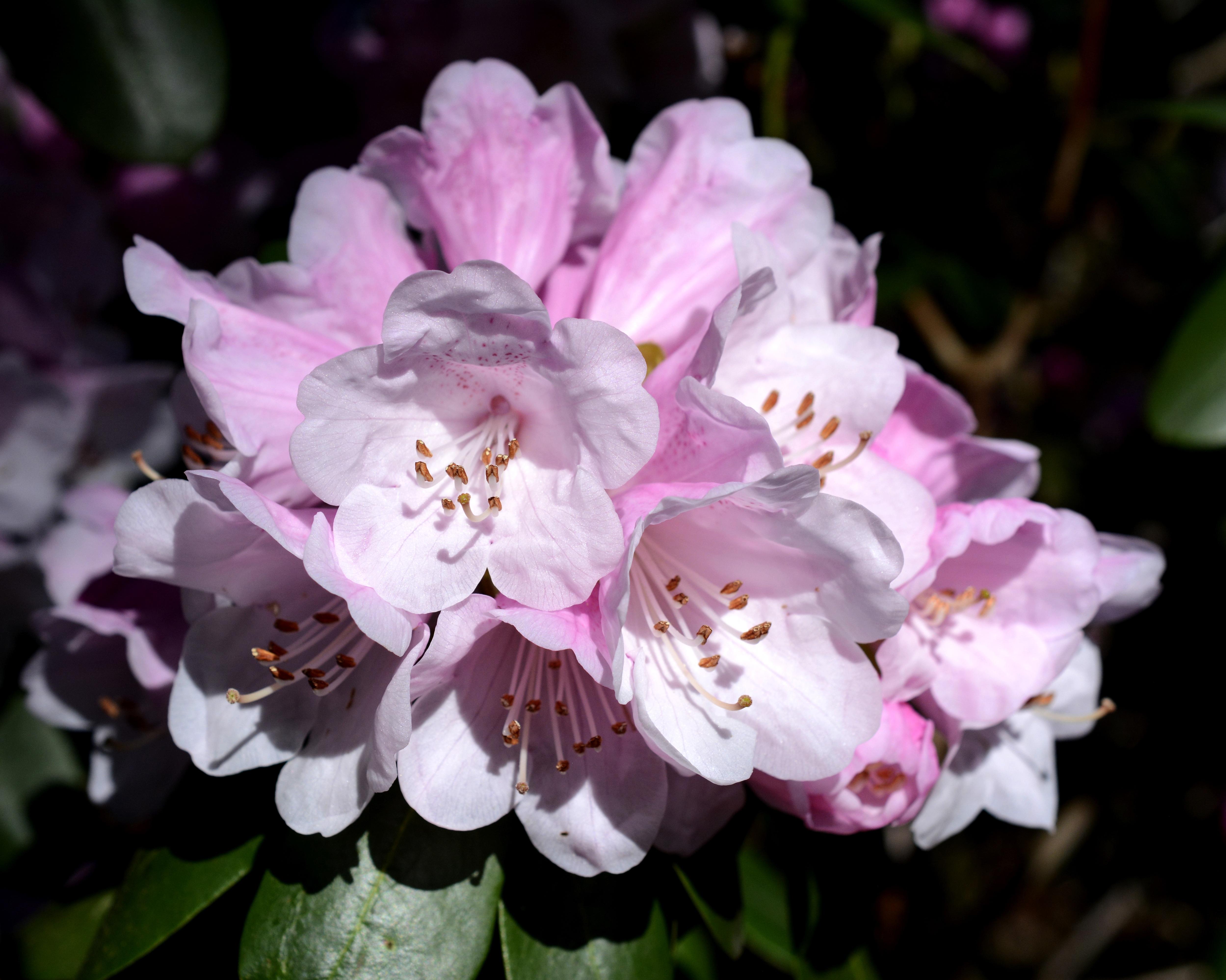 Free Images Nature Blossom White Flower Petal Spring Botany