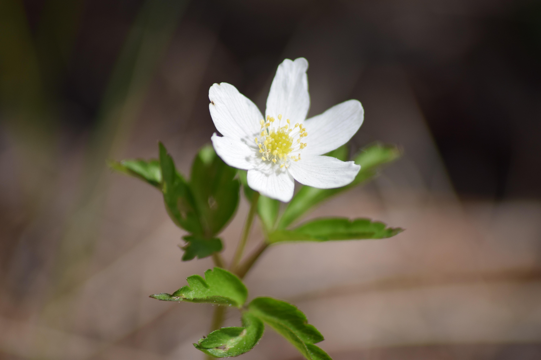 Free Images Nature Petal Green Botany Flora White Flower