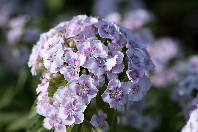 Free Images Nature Blossom White Flower Petal Summer Botany