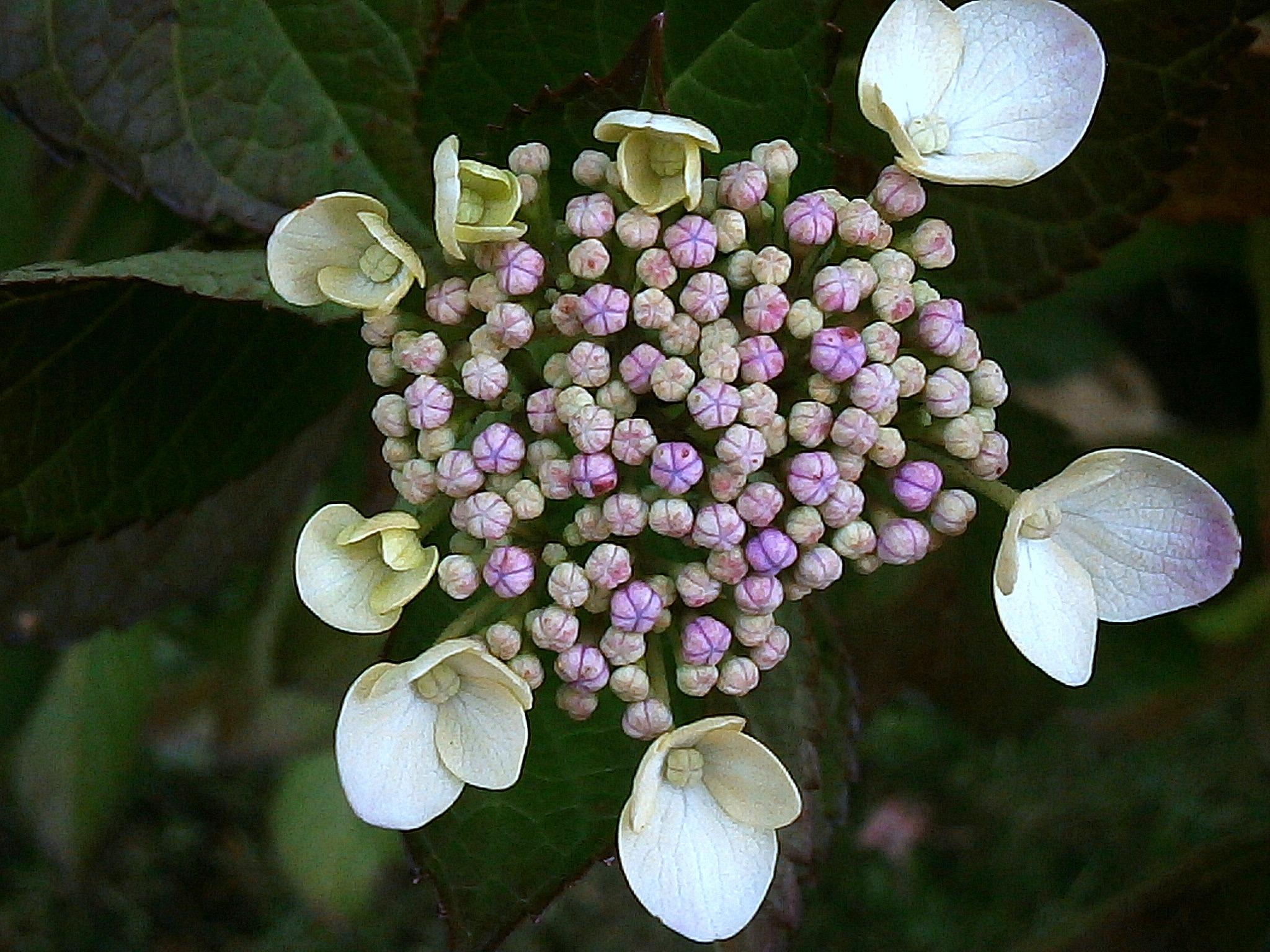 Free Images Nature Blossom White Flower Purple Petal Bloom