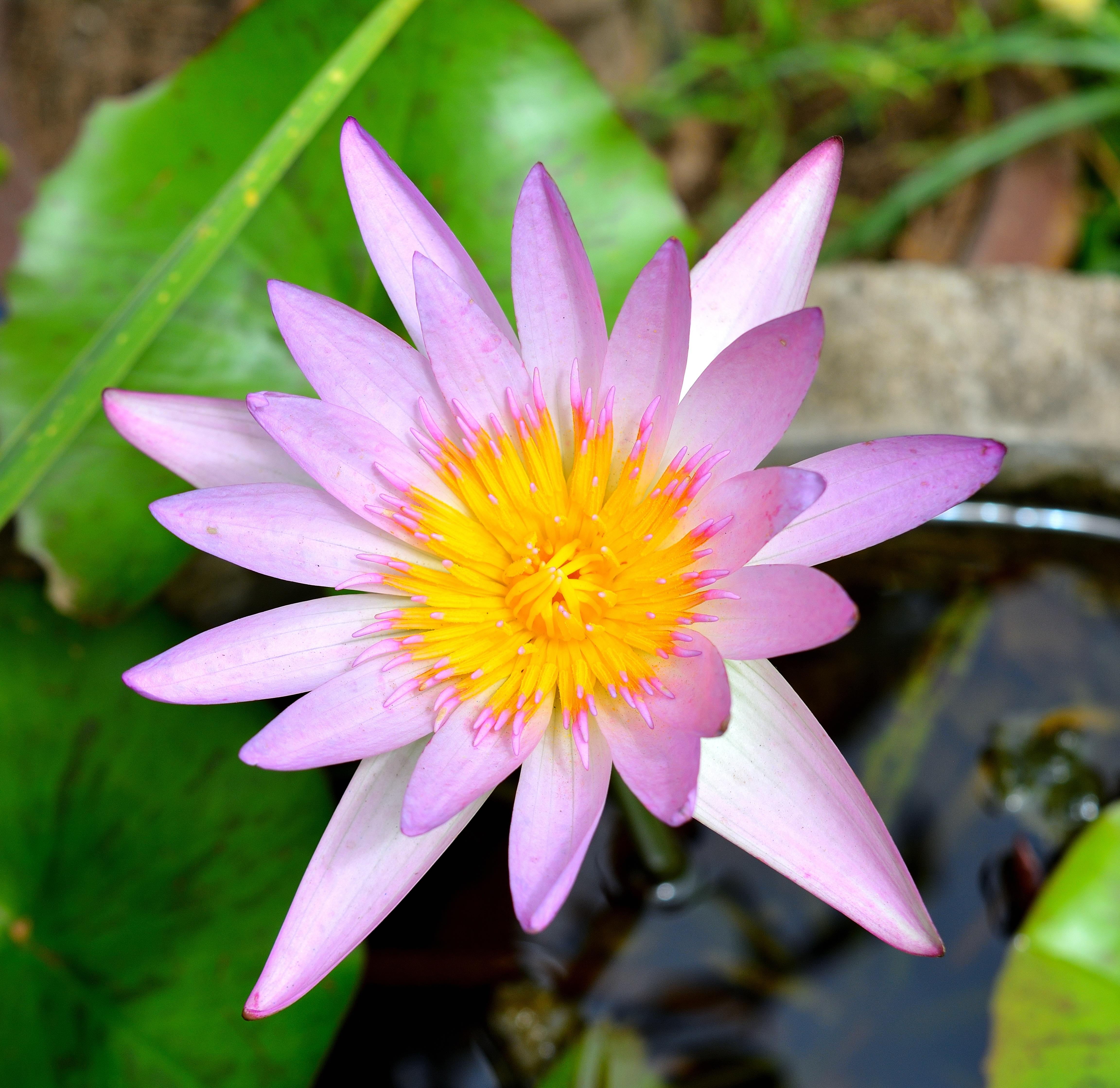 Free Images Nature Blossom Flower Purple Petal Green Botany