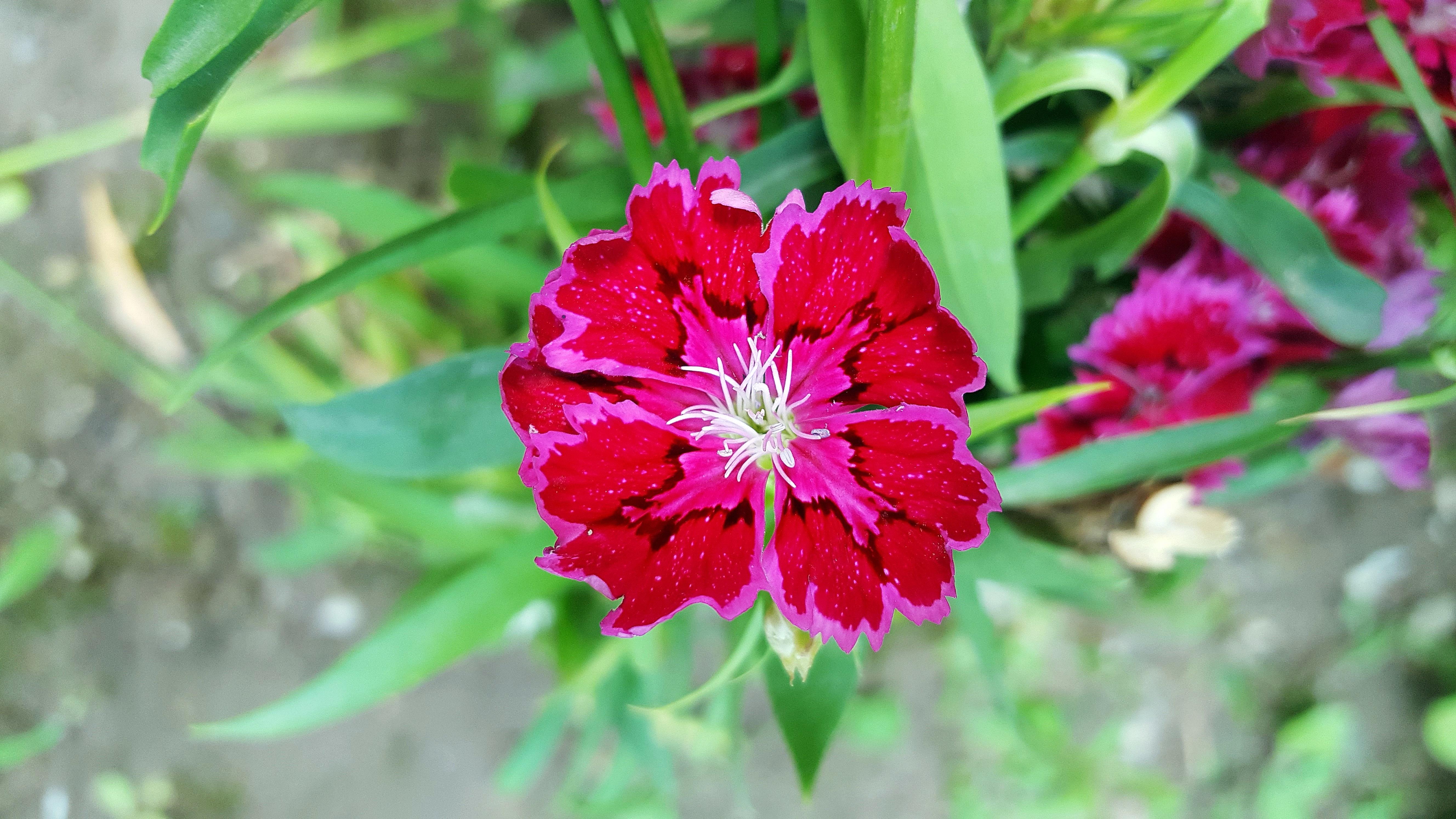 Free Images Nature Blossom Natural Botany Flora Season