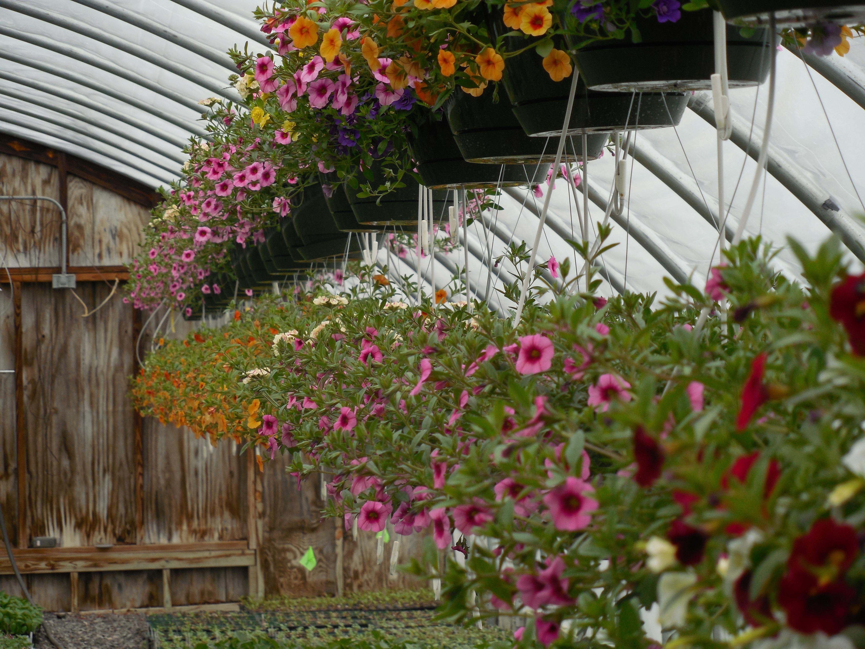 Lawn And Garden Nursery Thenurseries
