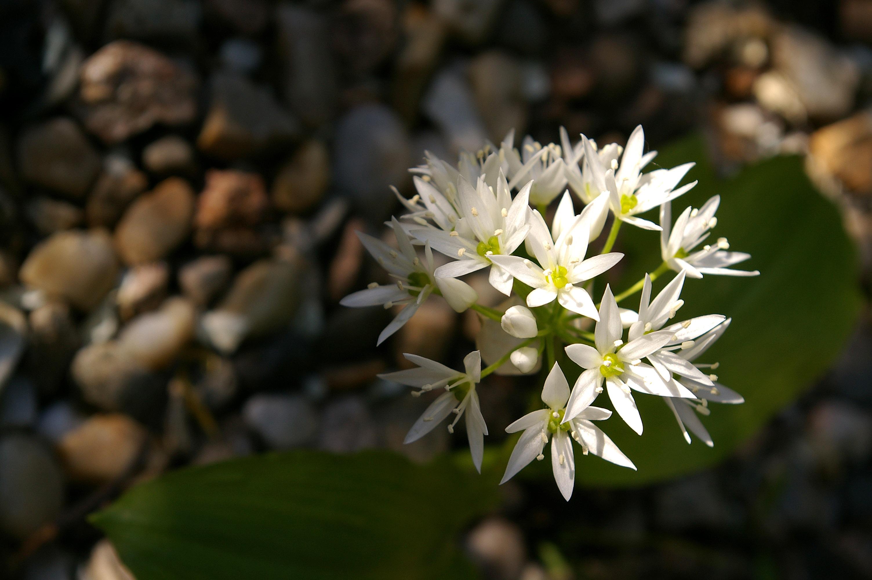 Images Gratuites La Nature Blanc Feuille Floraison Aliments