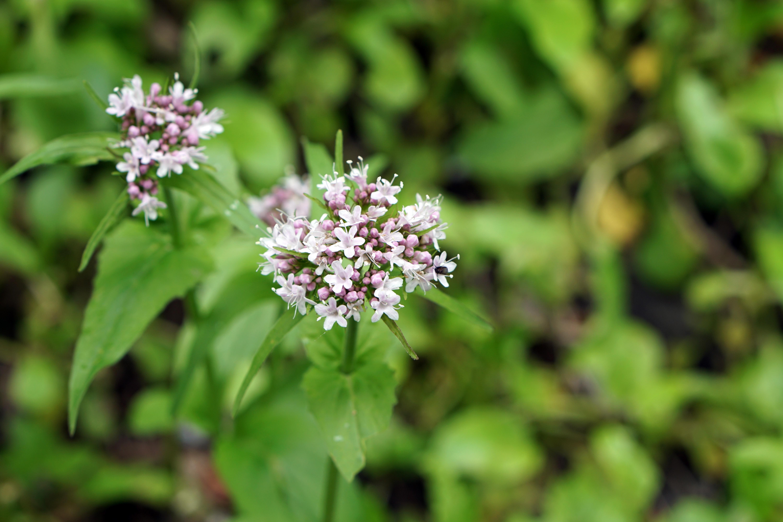 Images Gratuites La Nature Blanc Feuille Floraison Printemps