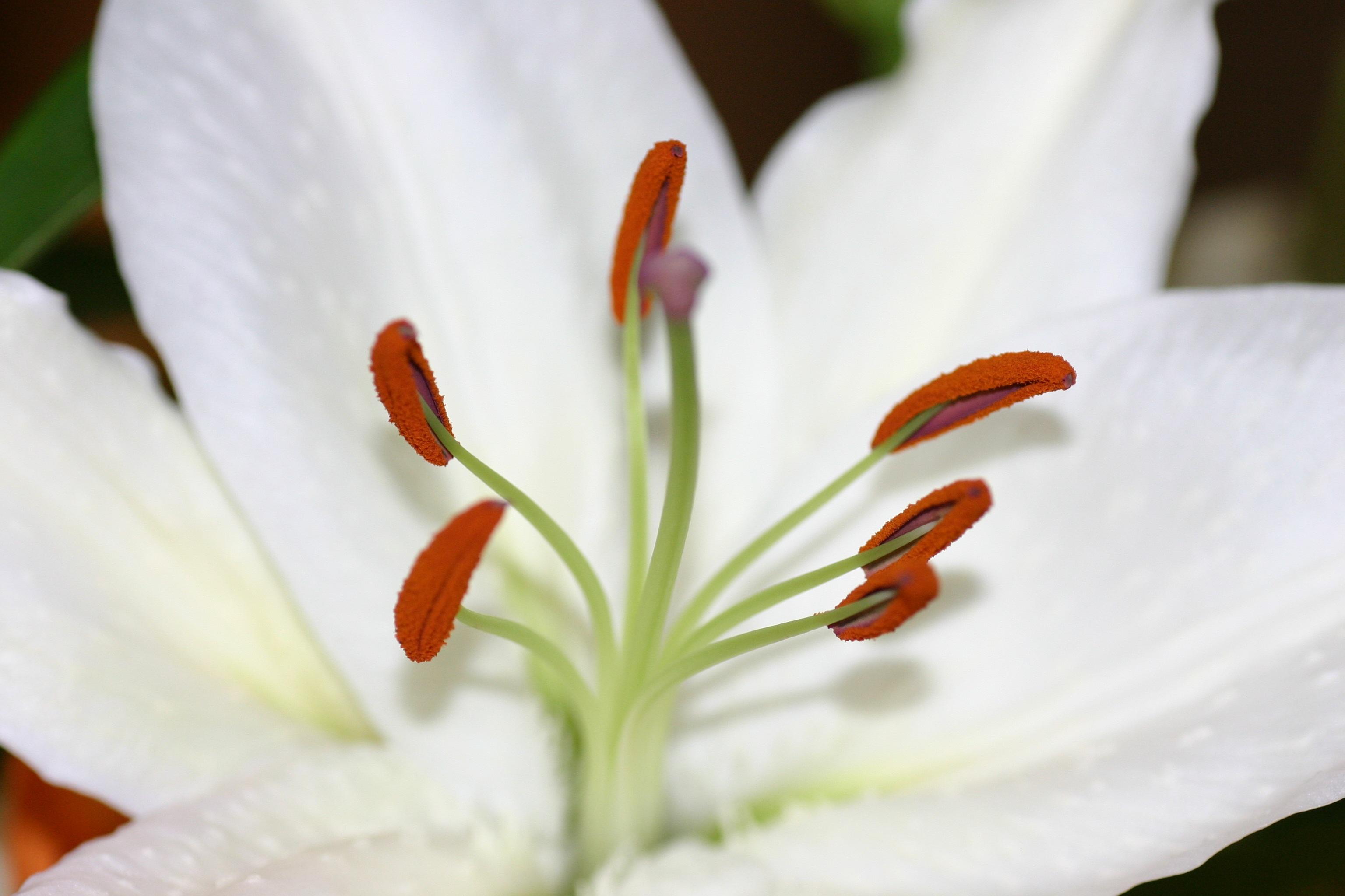 Free Images Nature Blossom Leaf Flower Petal Floral Bouquet