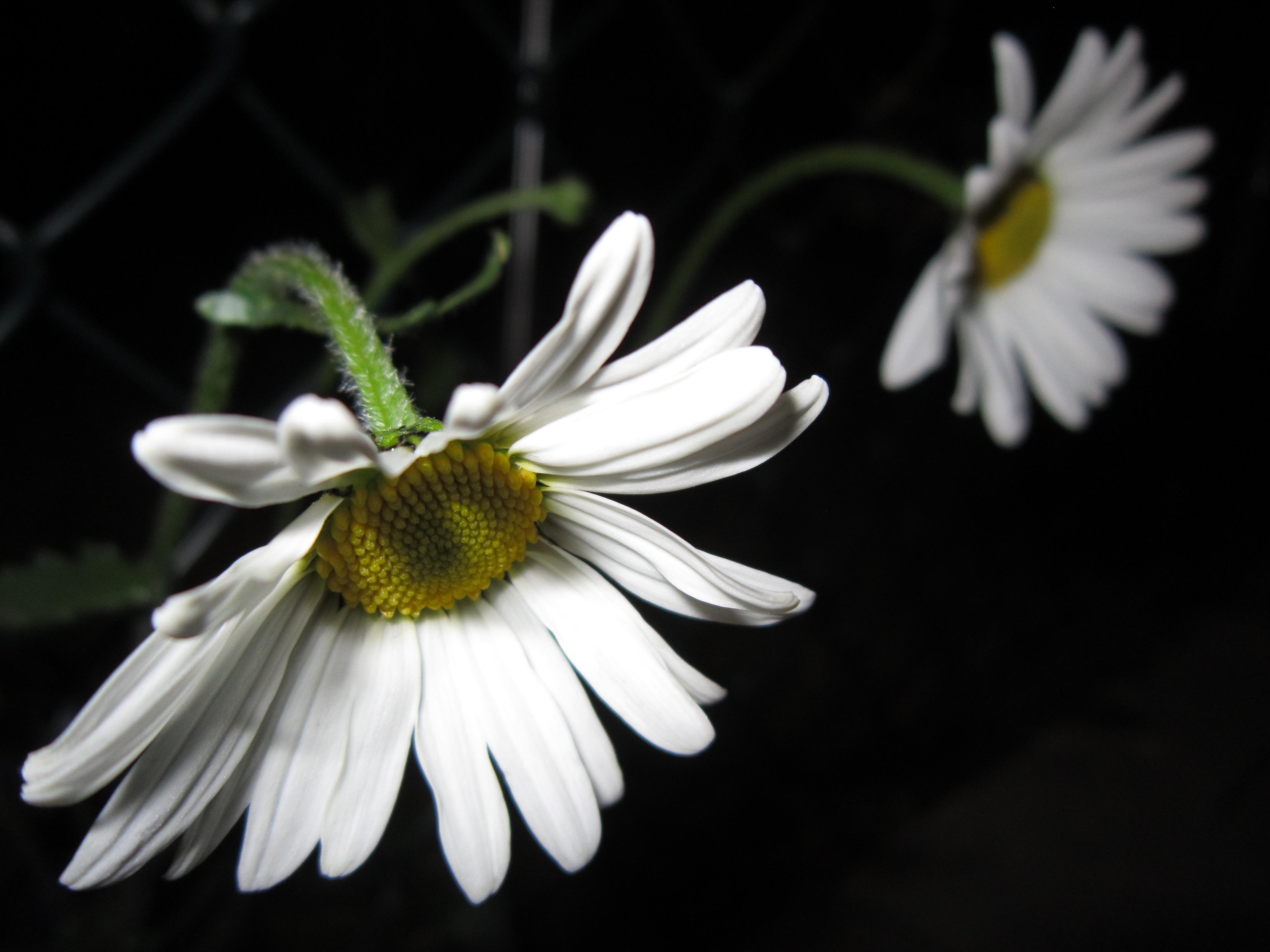 Images Gratuites La Nature Blanc La Photographie Petale