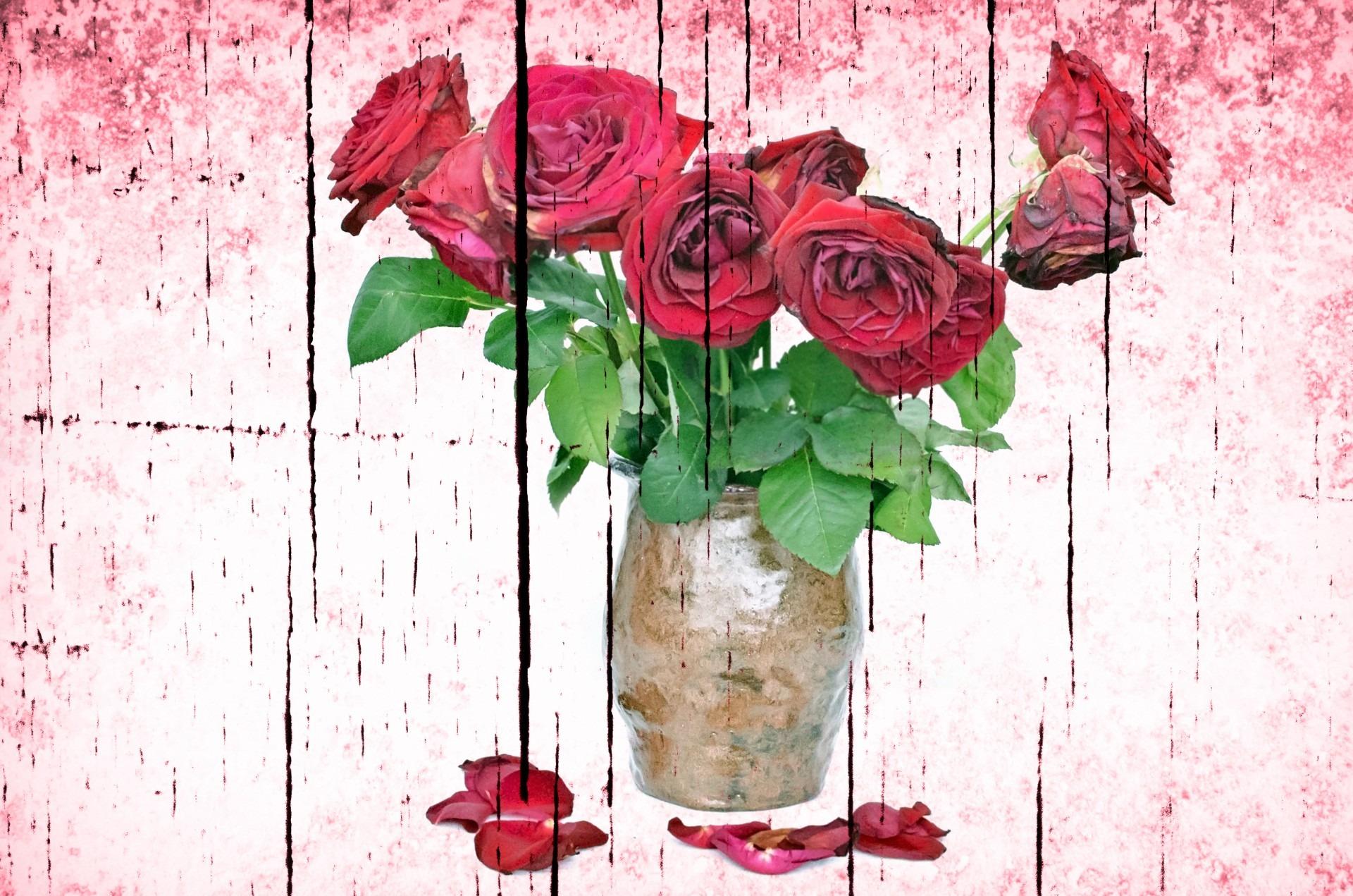 Unduh 100 Wallpaper Bunga Rapuh HD Terbaru