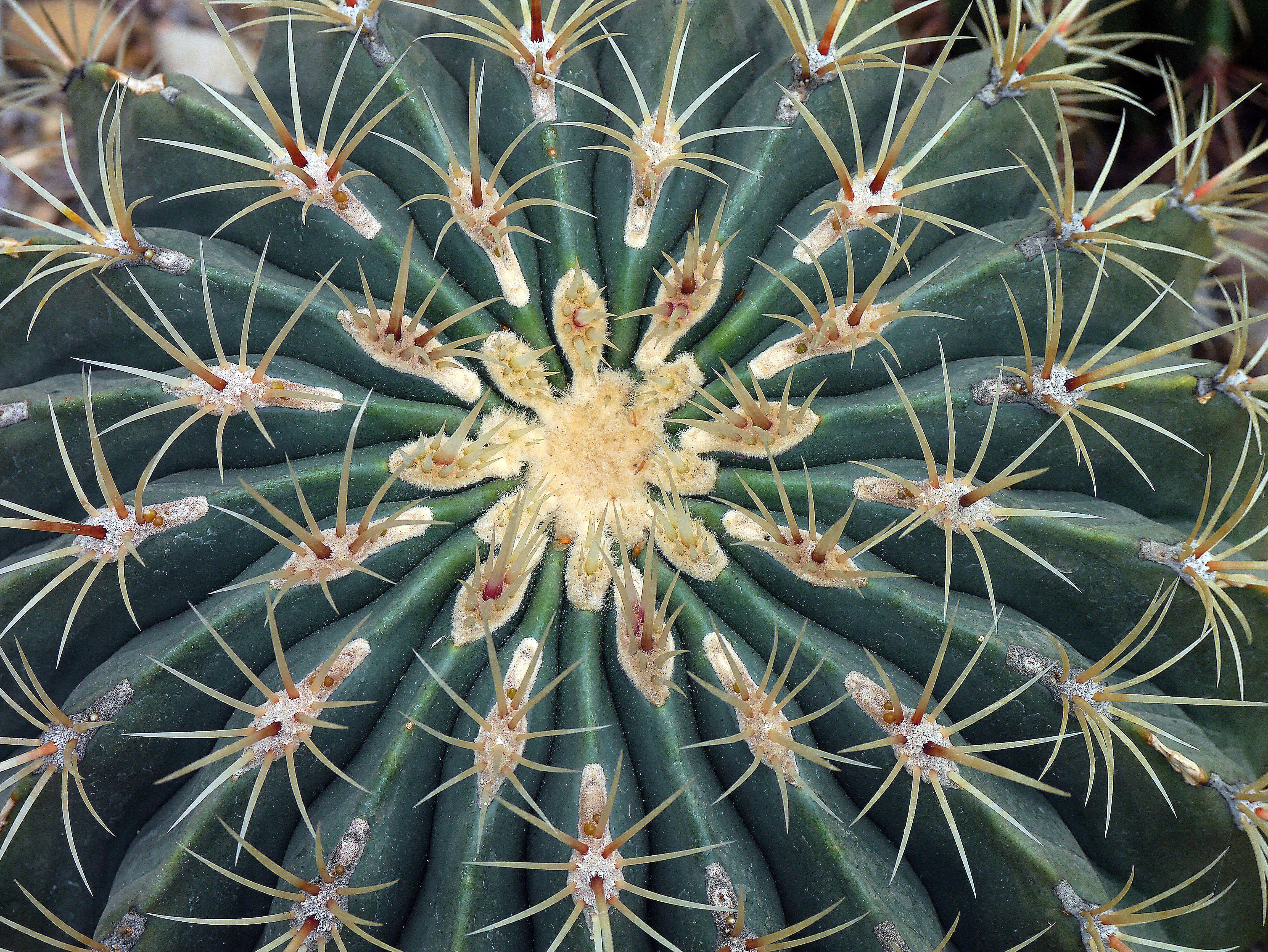 วันนี้กระบองเพชรที่เลี้ยง หอยทากบุกมาก แทะตายไปหลายต้น  เลยต้องเปลี่ยนดินจัดกระถางใหม่ สงสารพวกน้องๆ #กระบองเพชร #cactus  #succulents ...