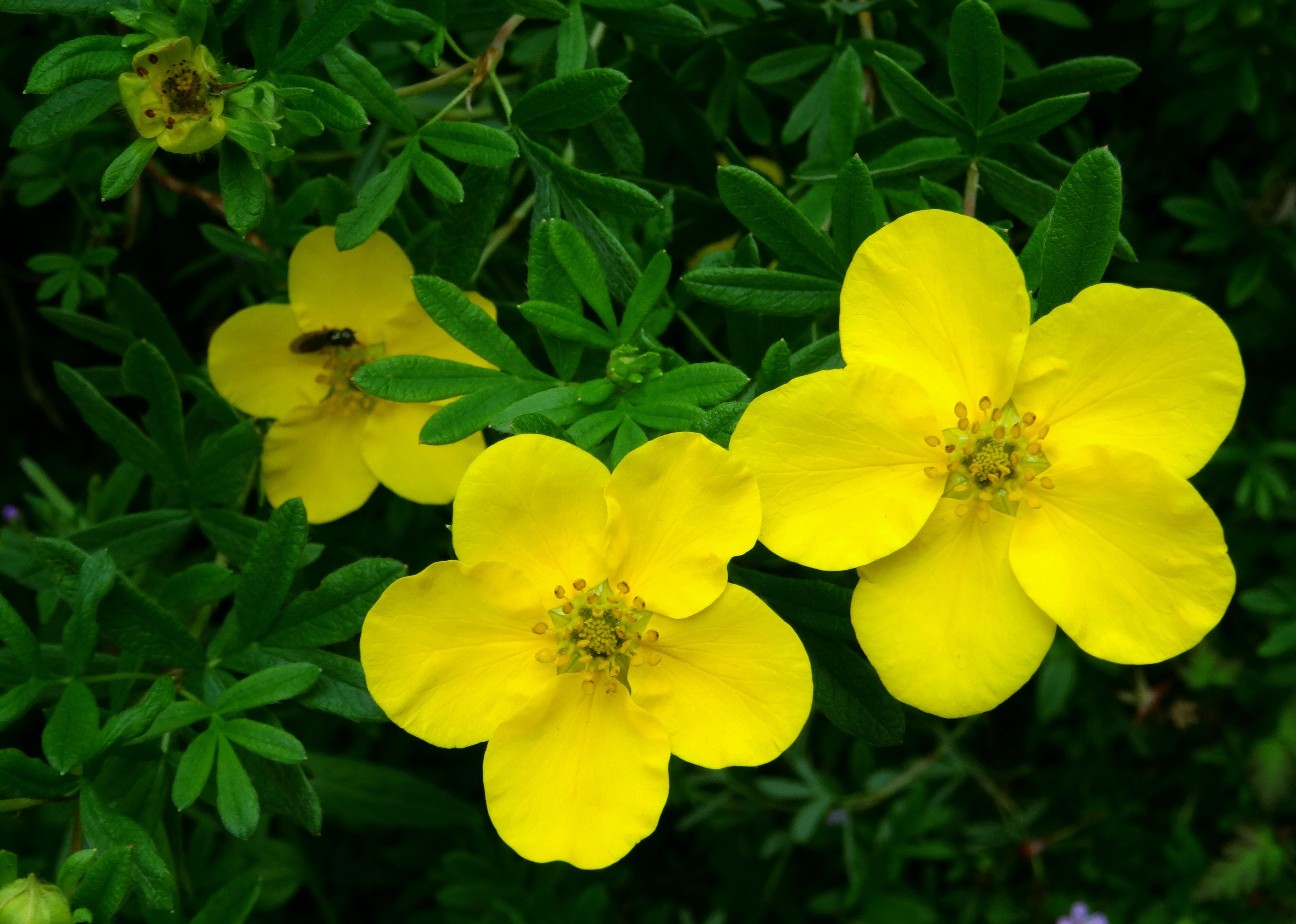 Free Images Nature Blossom Structure Grain Flower Petal