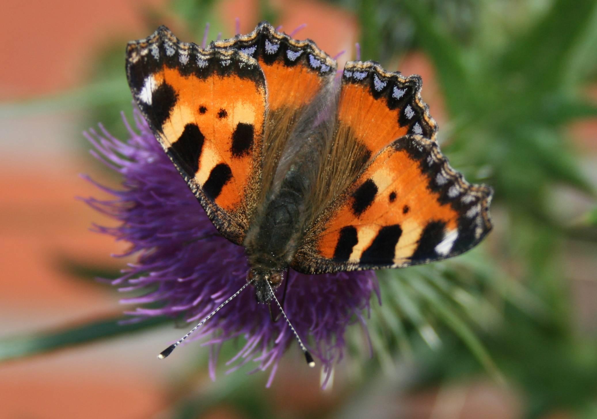free images nature blossom wing flower bloom summer orange