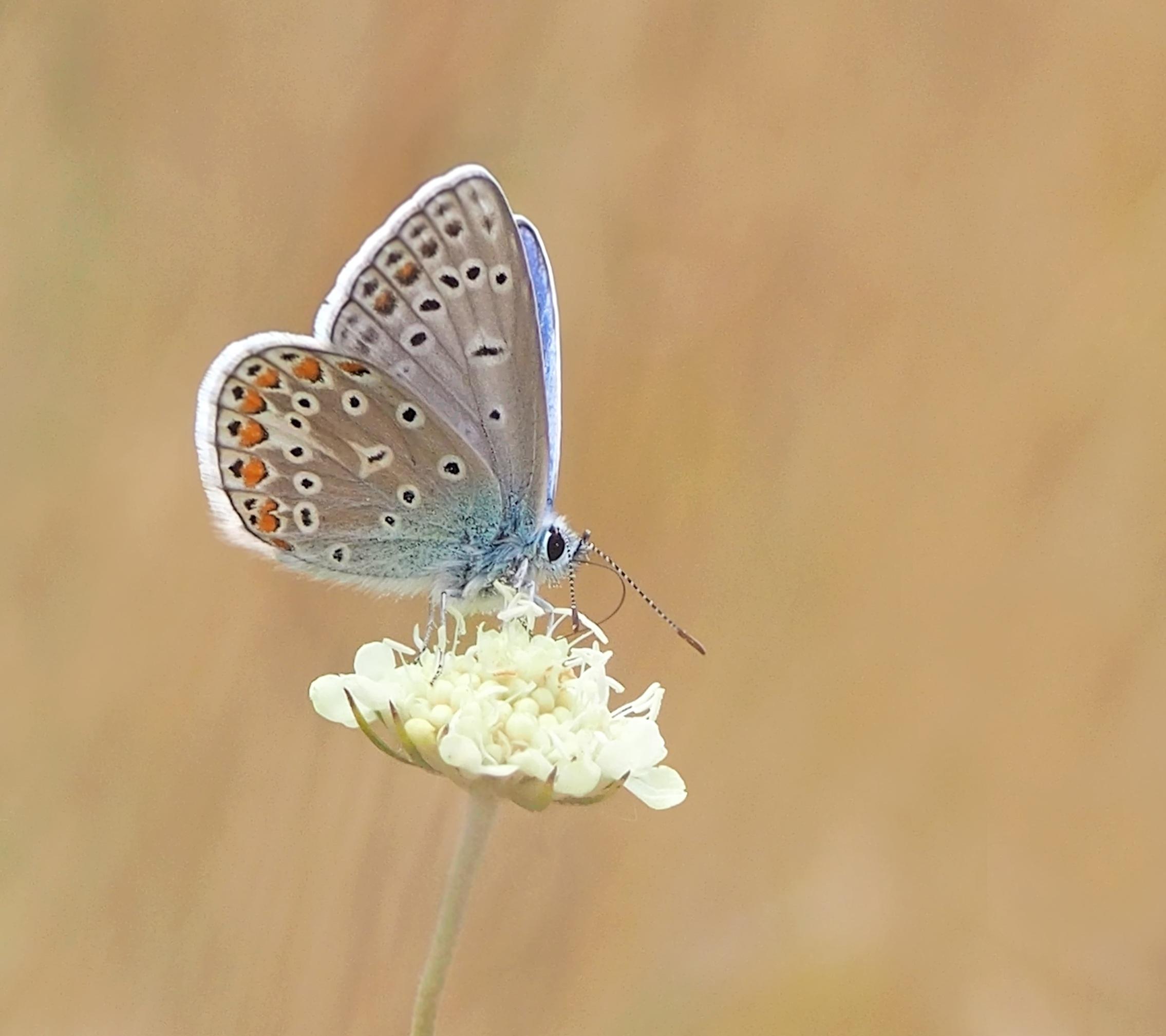 Images gratuites la nature fleur aile p tale - Image papillon et fleur ...