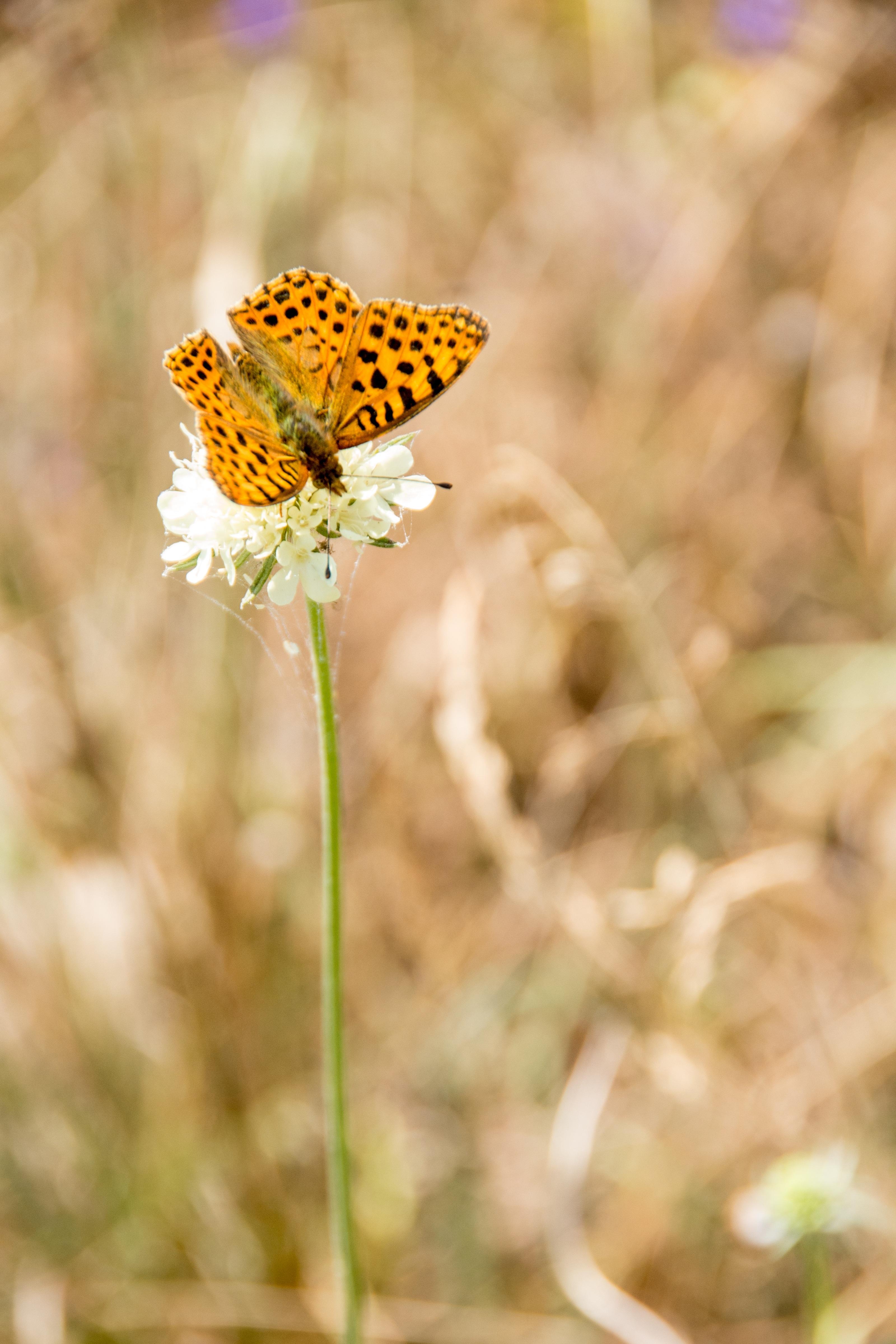 無料画像 自然 翼 工場 草原 葉 花弁 咲く 飛ぶ 夏