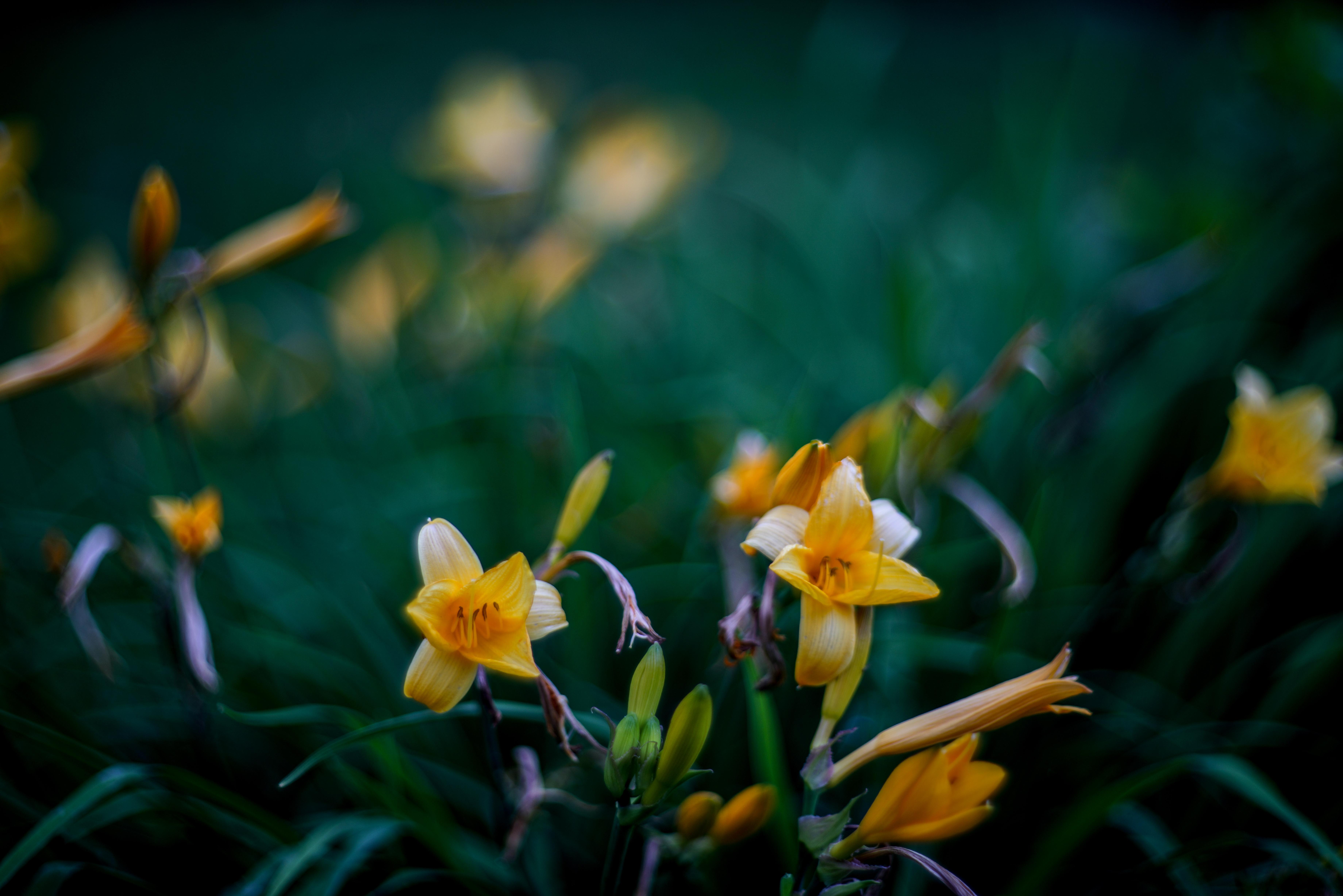 Free Images Nature Bokeh Flower Green Botany Yellow Garden