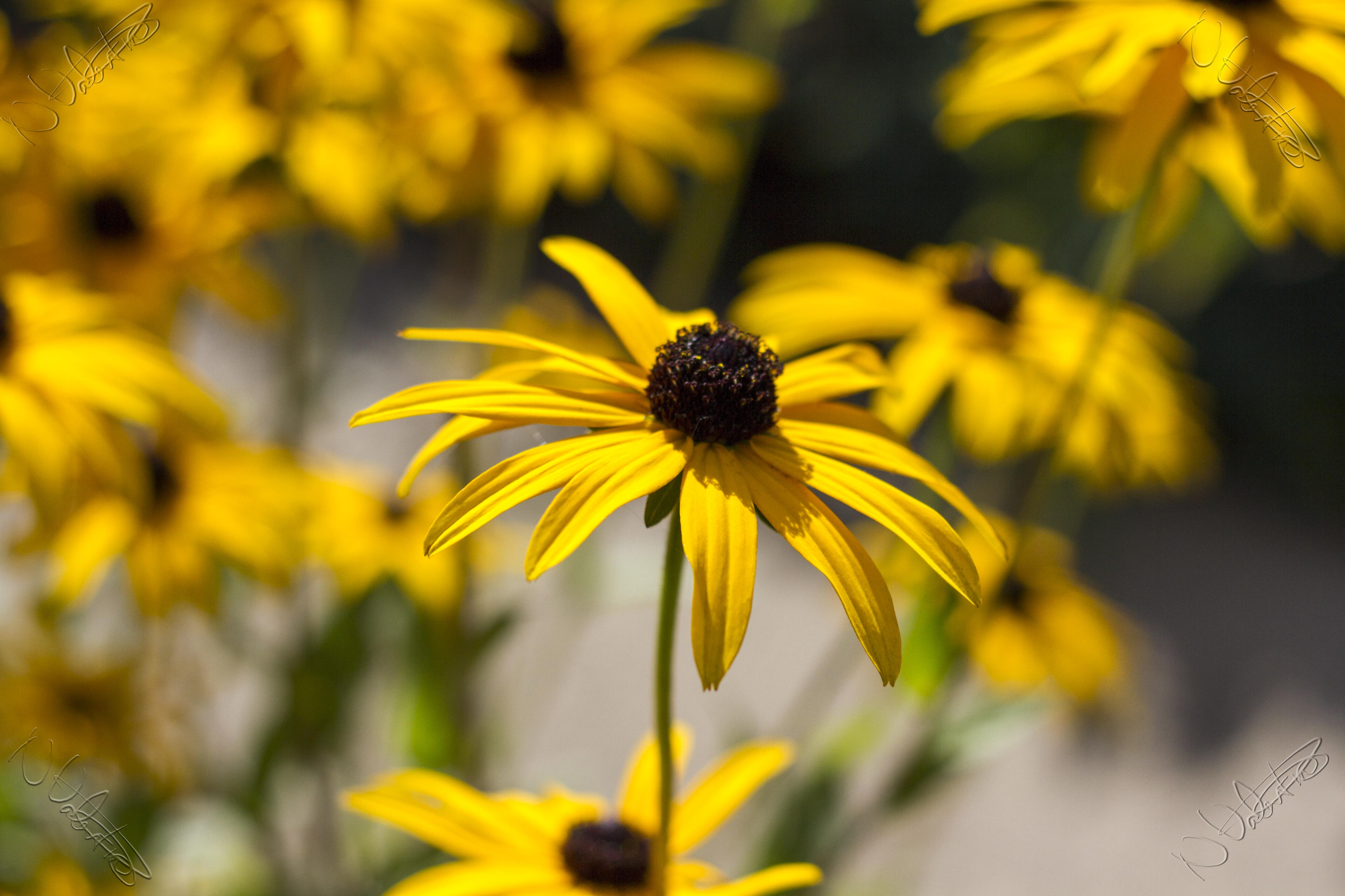 Free Images Nature Bokeh Meadow Flower Petal Pollen Autumn
