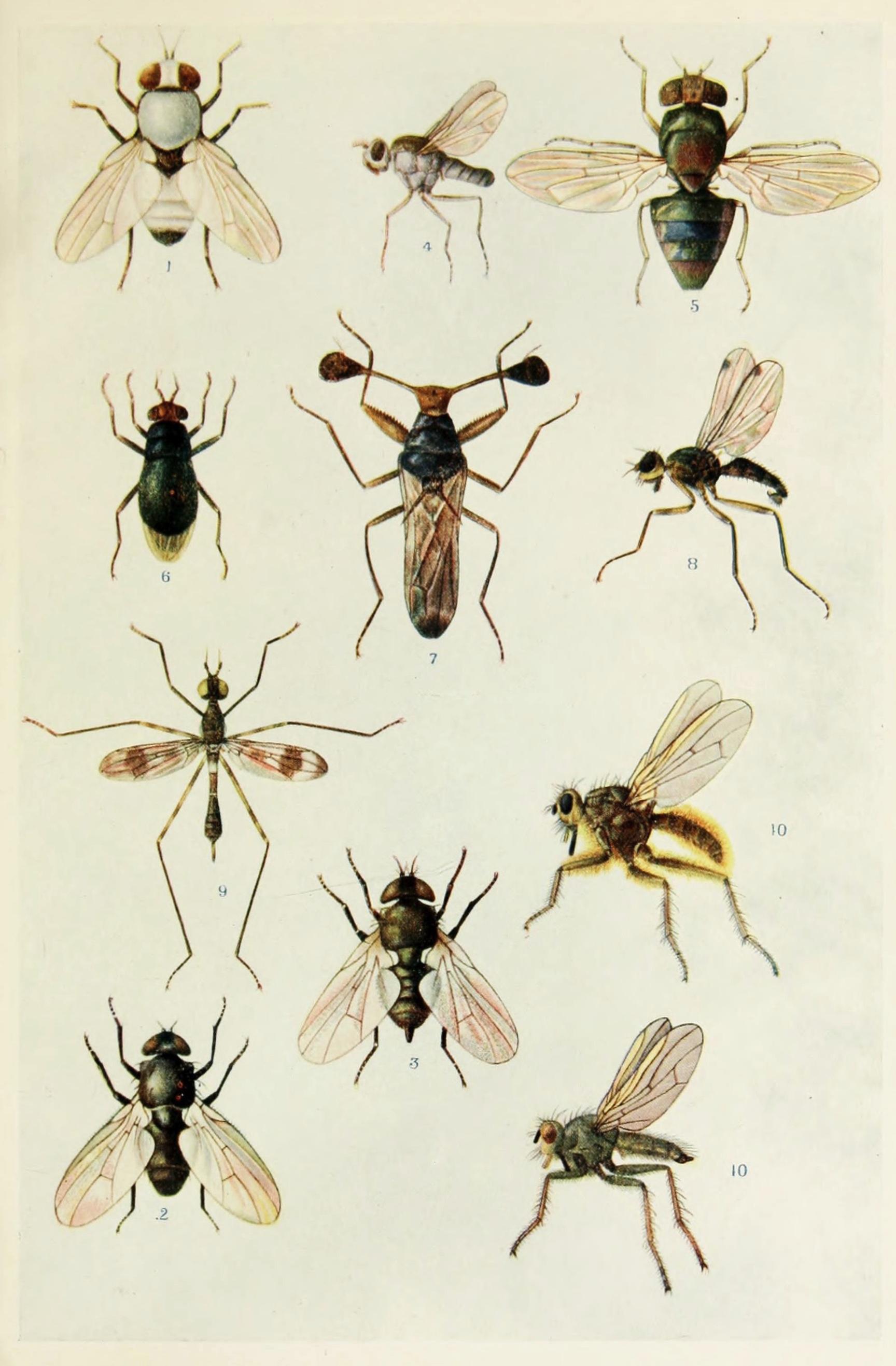 Gambar Alam Book Terbang Margasatwa Tropis Fauna