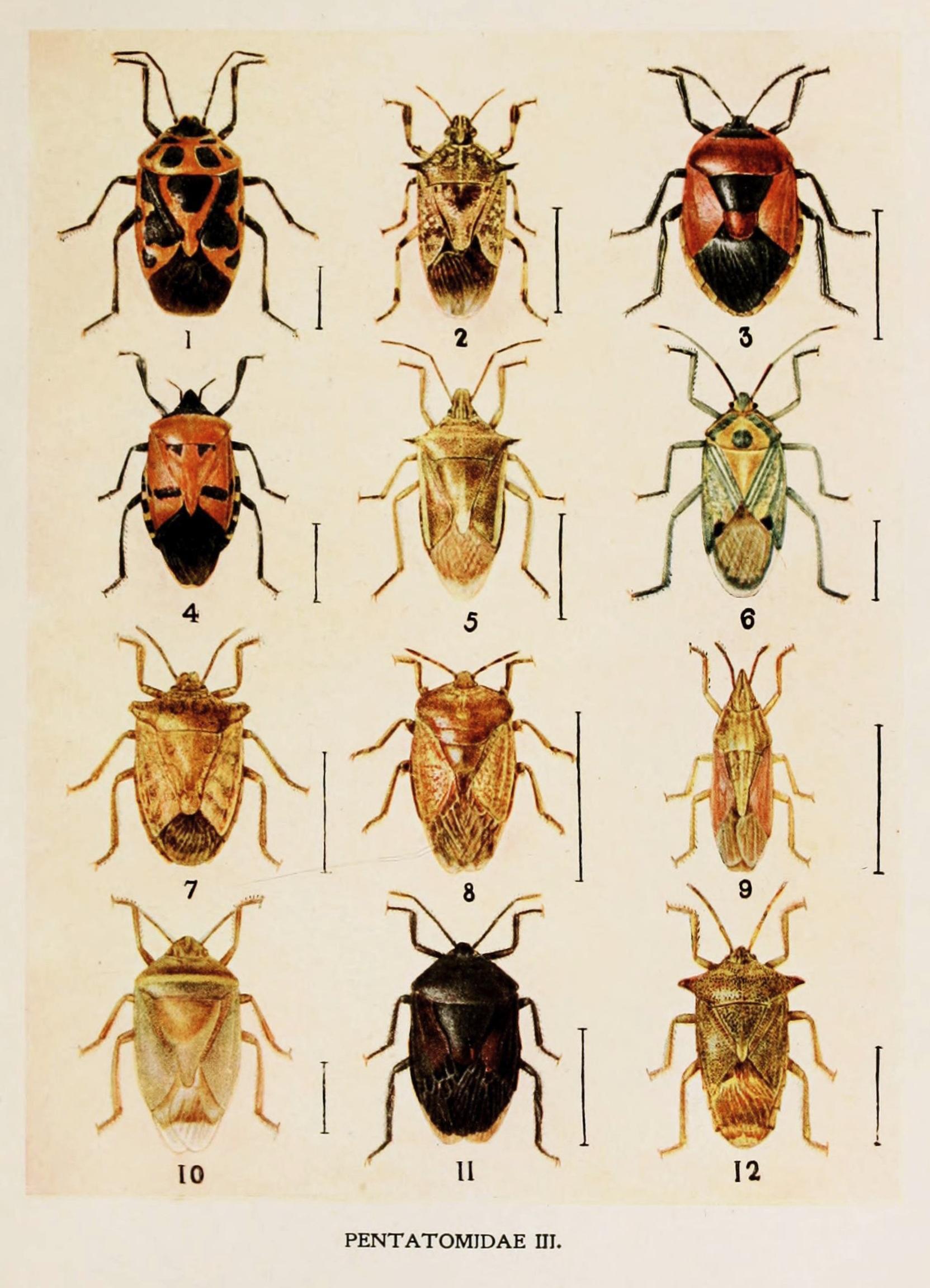 Gambar Alam Book Pola Tropis Fauna Invertebrata Lukisan