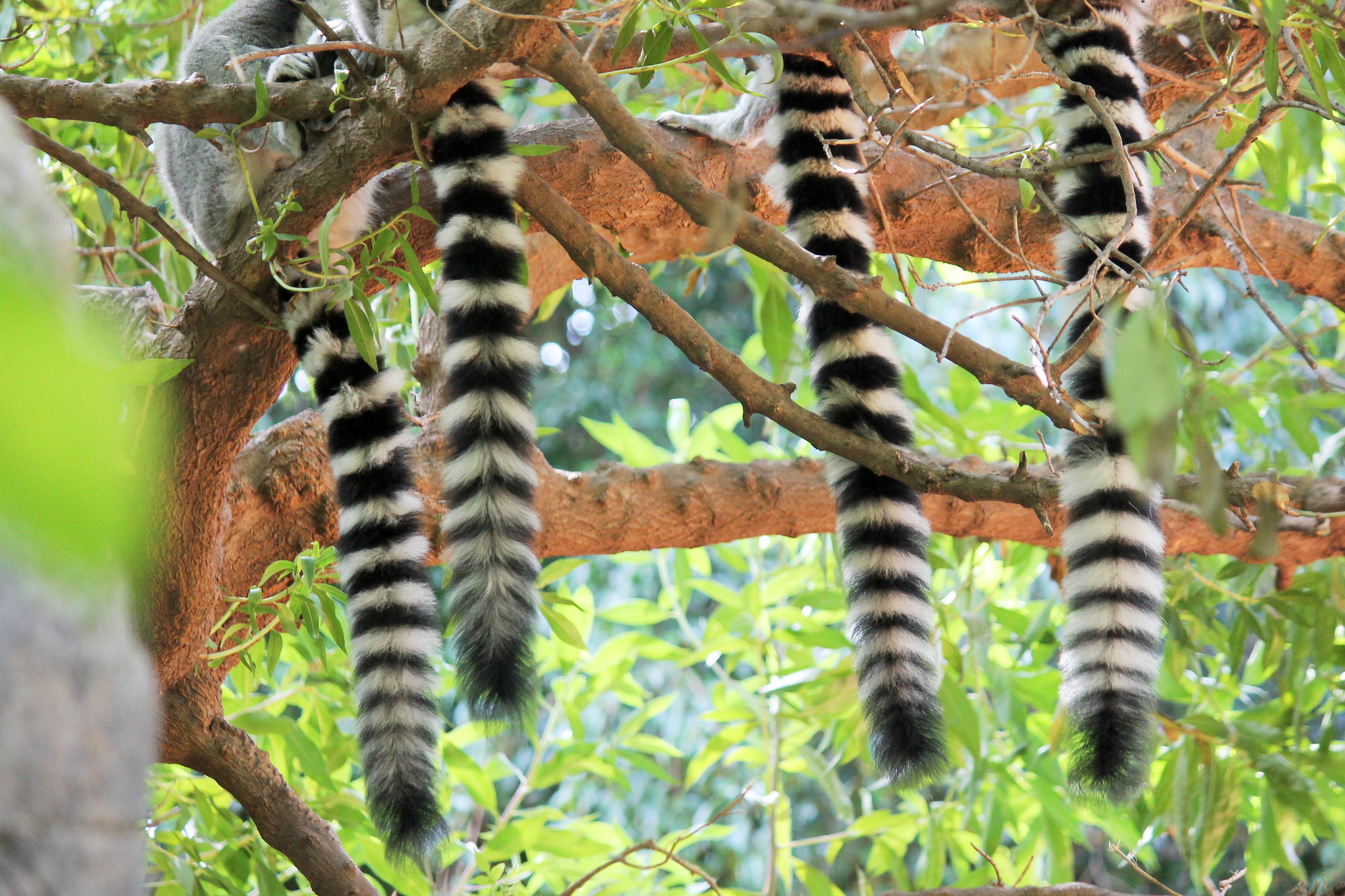 Bien-aimé Images Gratuites : la nature, branche, faune, jungle, insecte  RK44