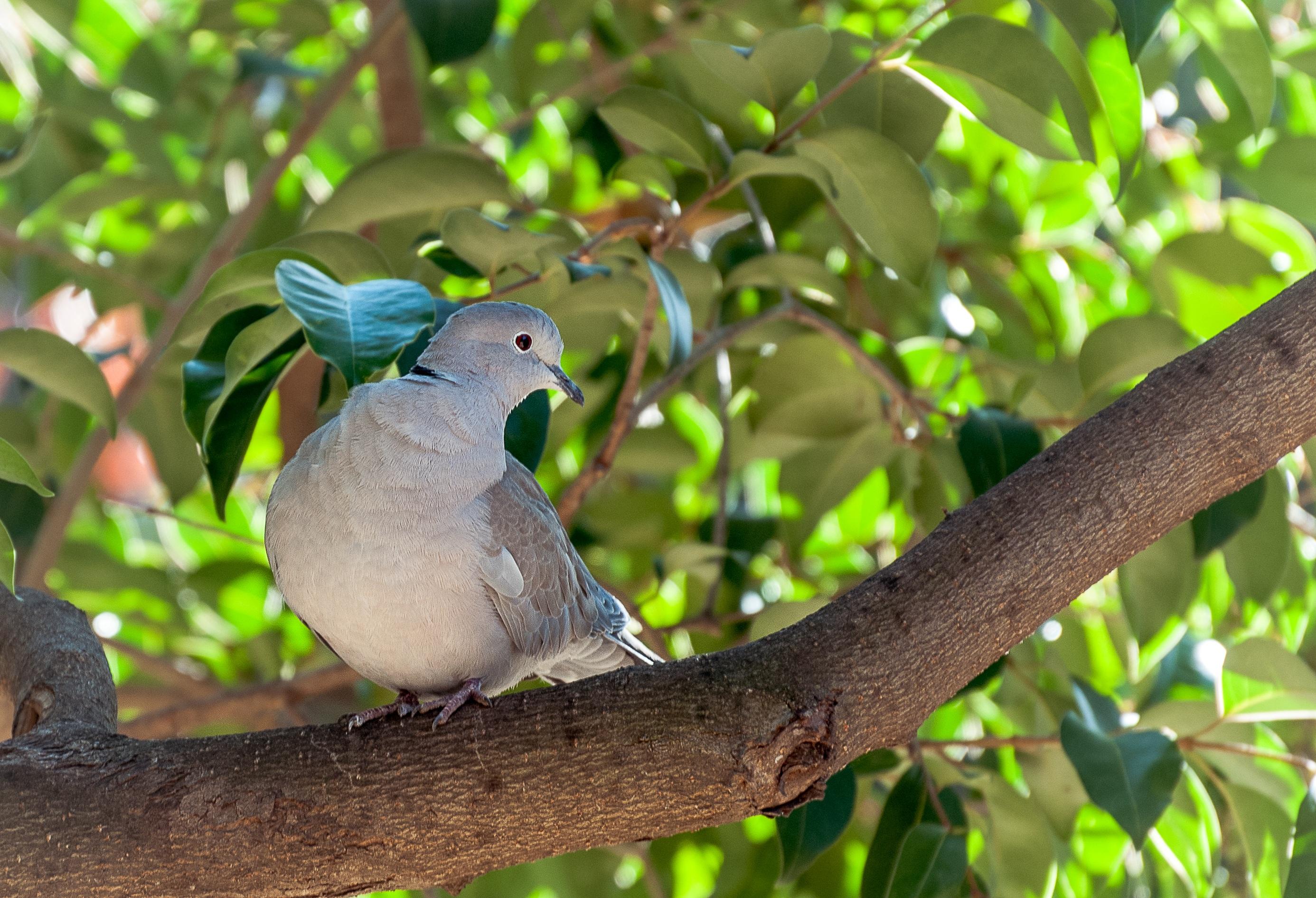 Images gratuites la nature branche oiseau animal faune vert jungle le bec des oiseaux - Signification des plumes d oiseaux ...