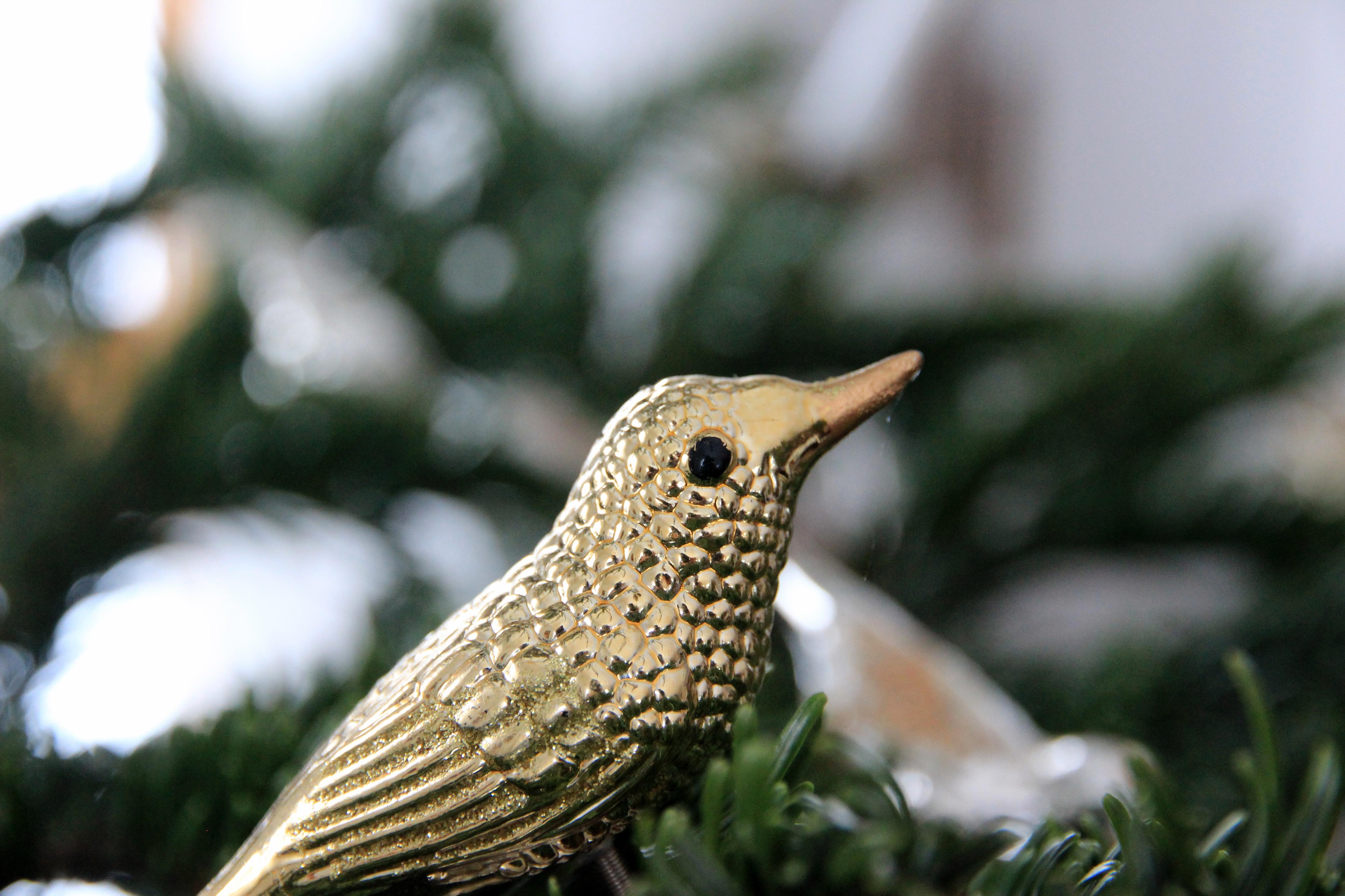 76+ Gambar Ornamen Fauna Paling Hist