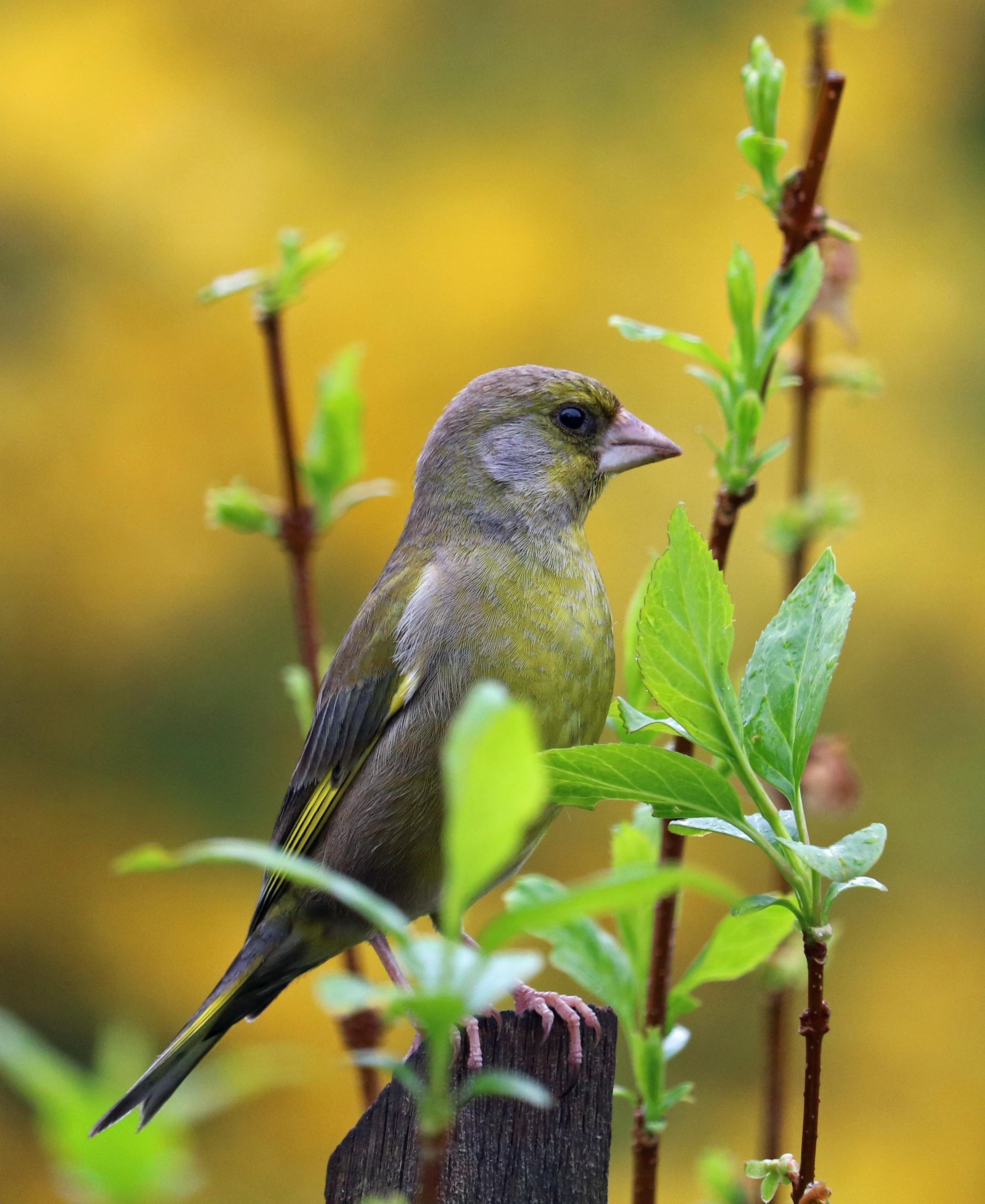 Gratuites la nature branche oiseau fleur faune le